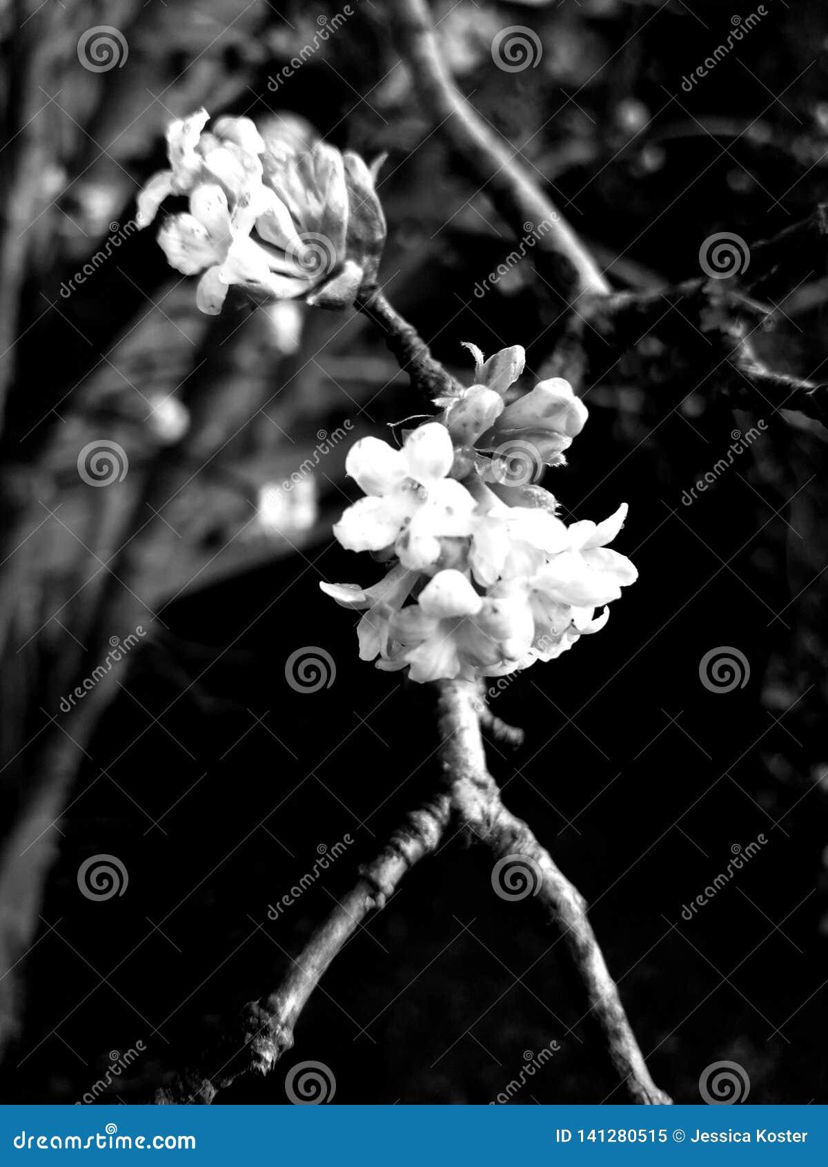Flor en un palillo