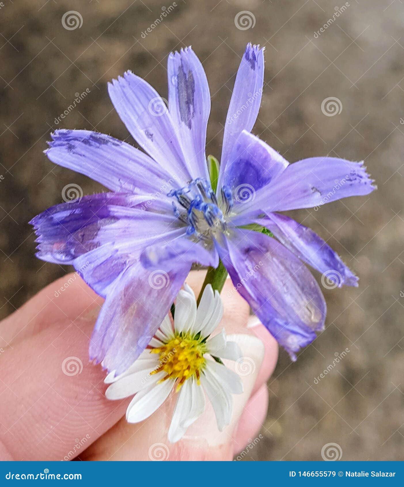 Flor encontrada en el centro del invierno