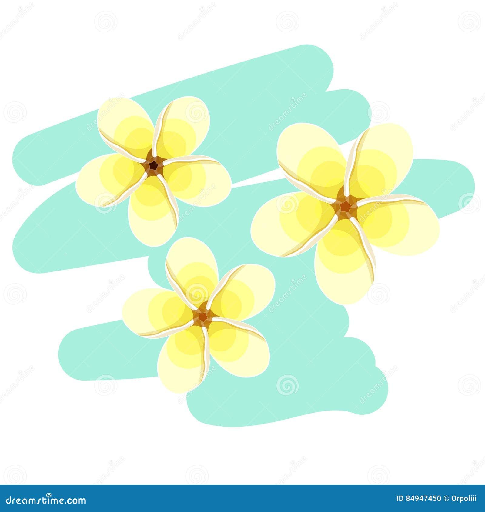 Flor Hawaiana Del Plumeria Un Exótico Ilustración Del Vector ...