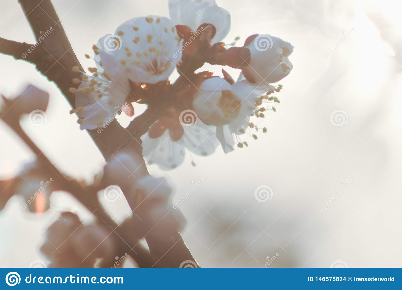 Flor hermosa del flor de la fruta