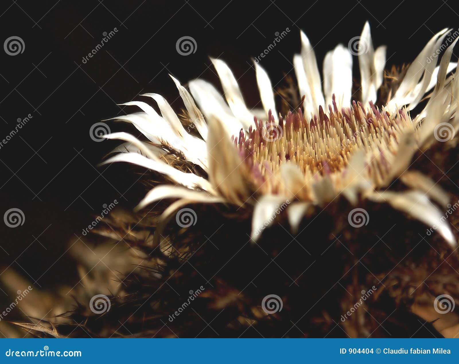 Flor inoperante