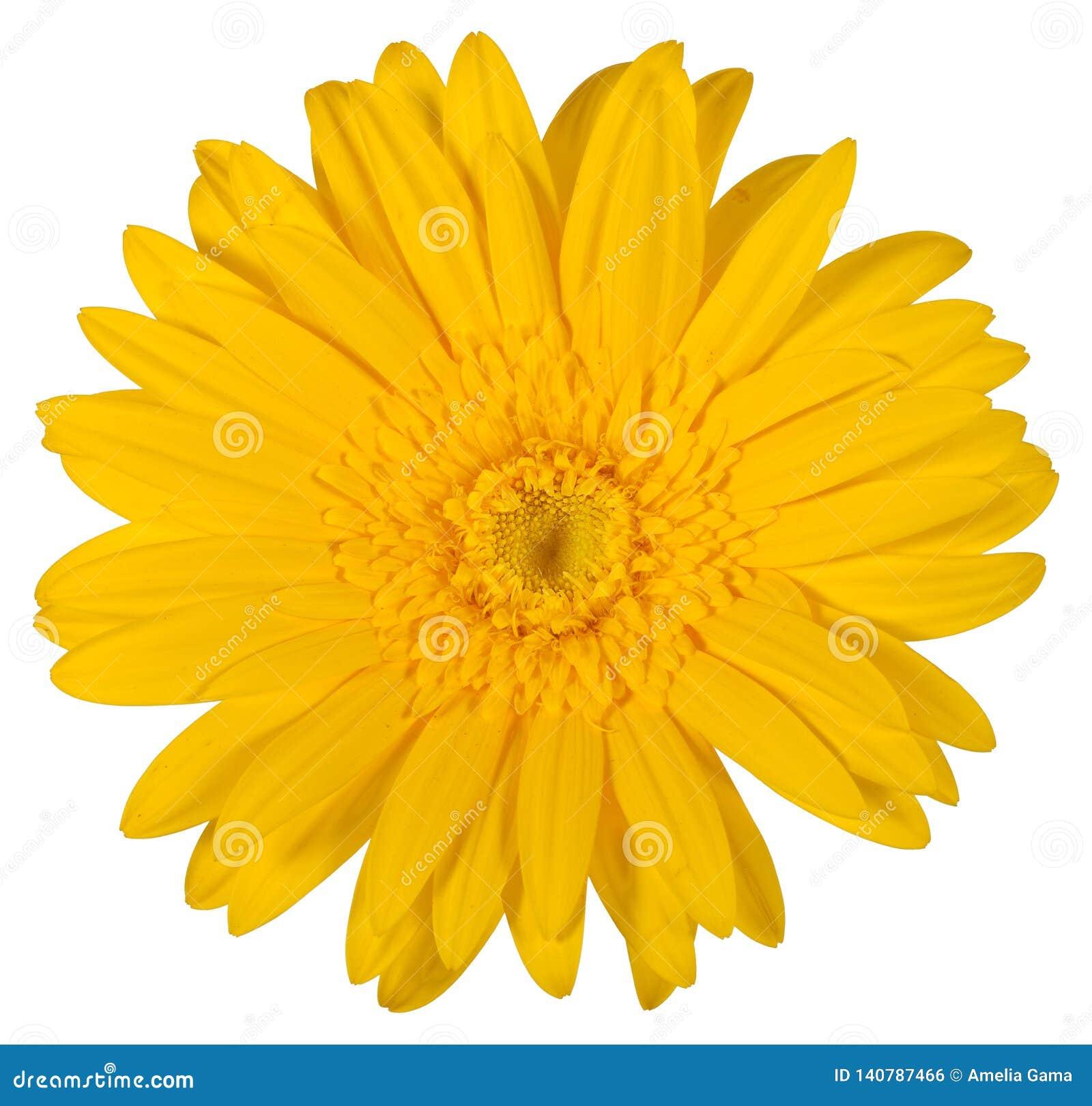 Flor Isolada Com Um Fundo Branco Foto De Stock Imagem De