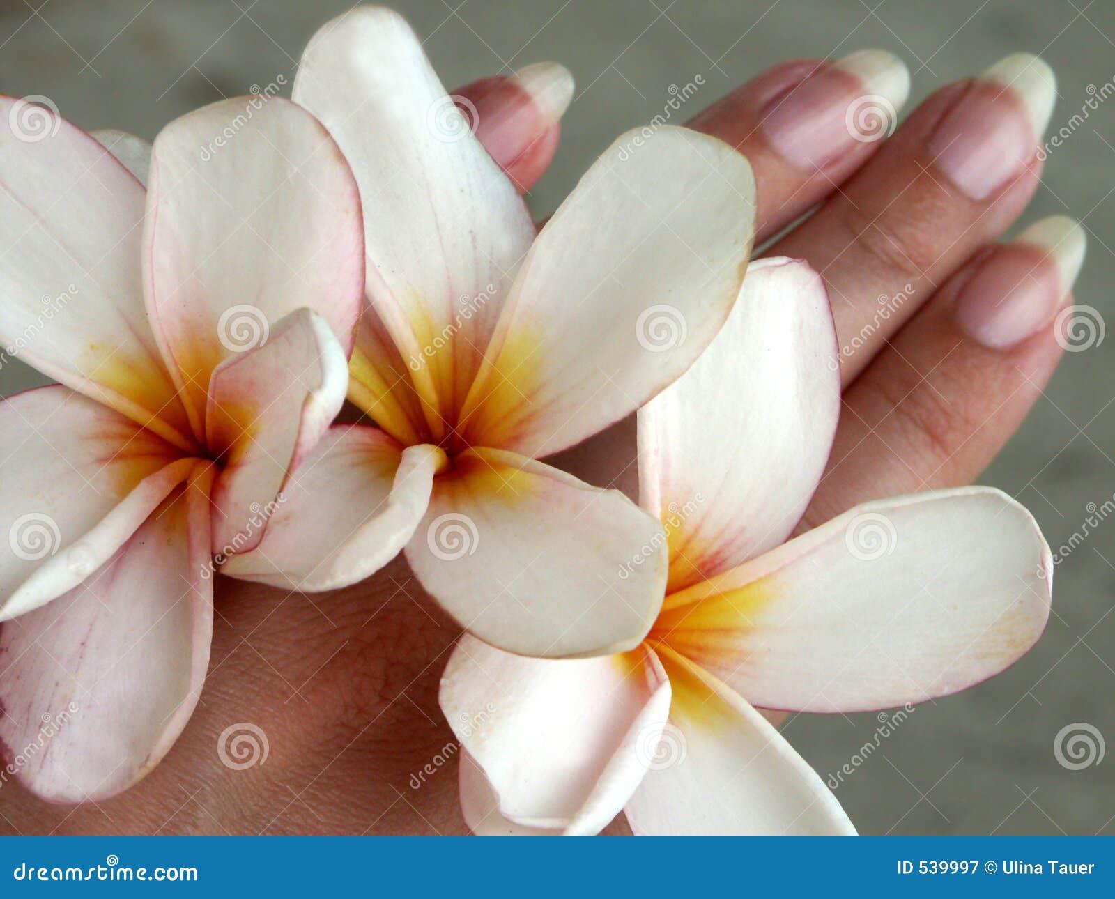 Flor-mãos