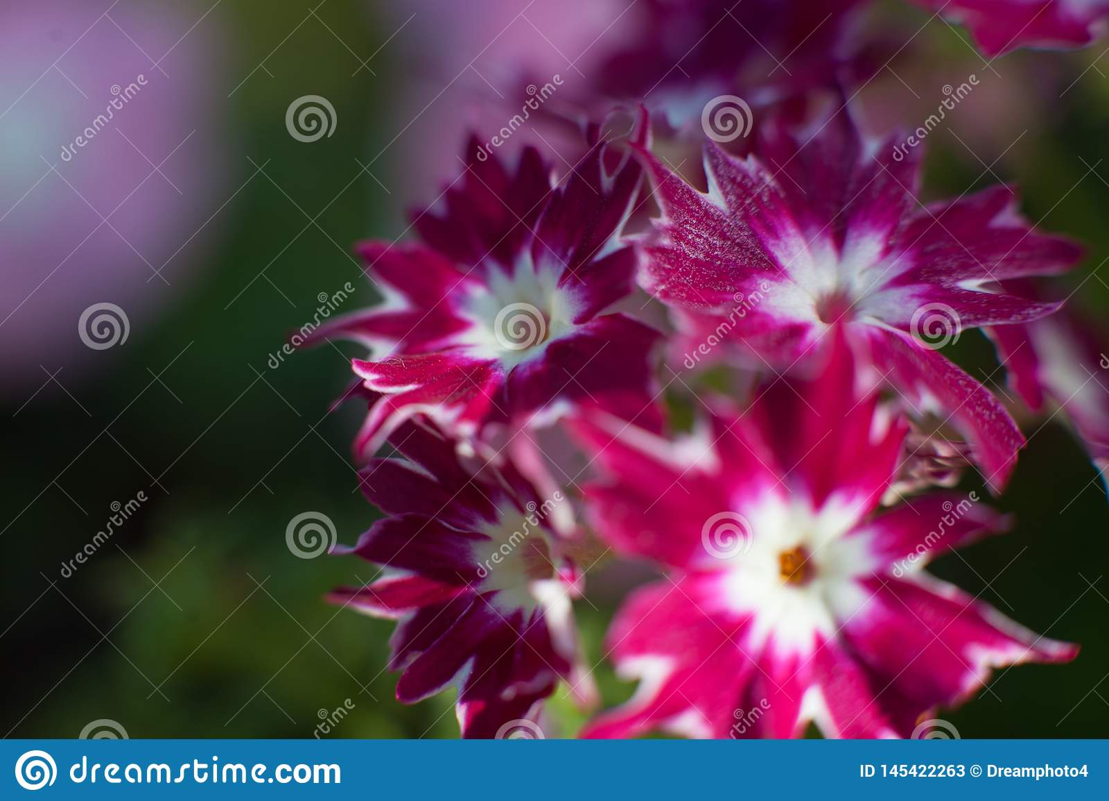 Flor macro violeta