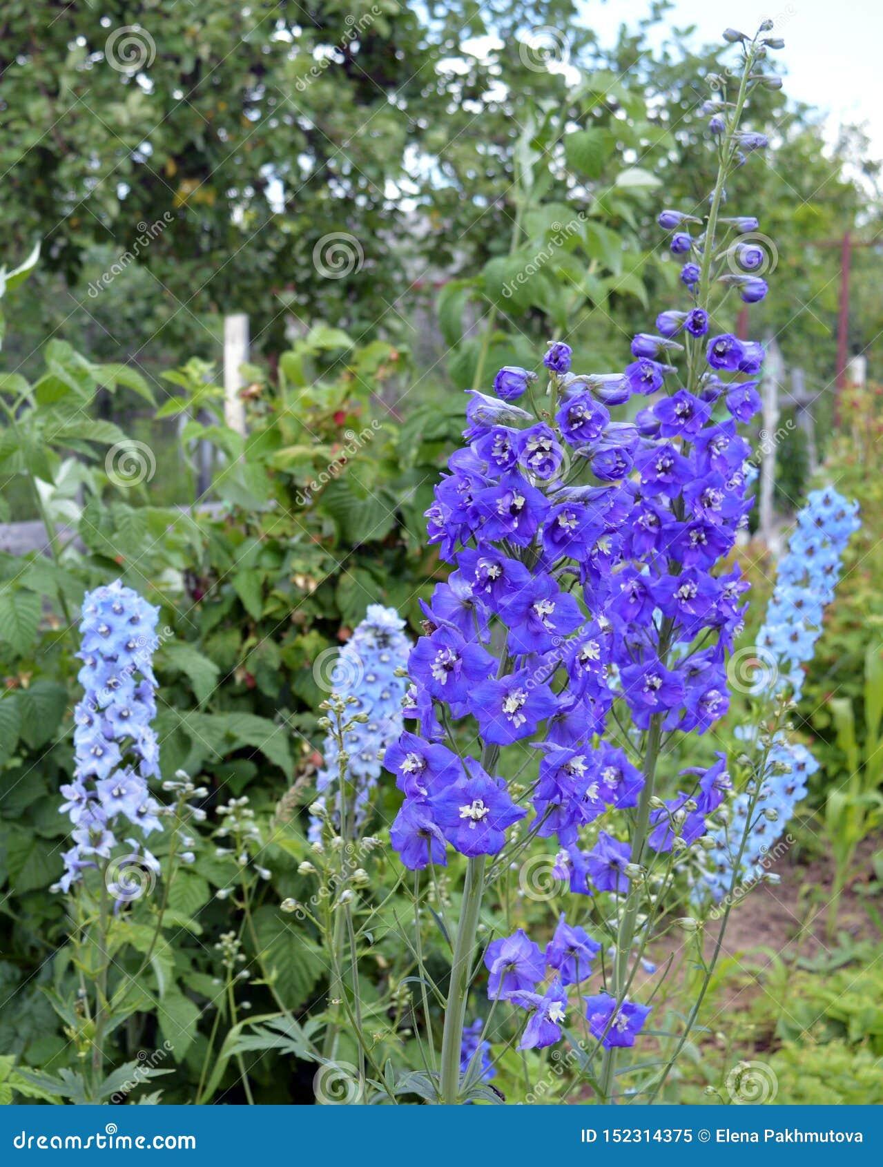 Flor, natureza, flores, roxo, jardim, mola, planta, verde, azul, flor, lupine, verão, flor, flora, campo, alfazema, folha,