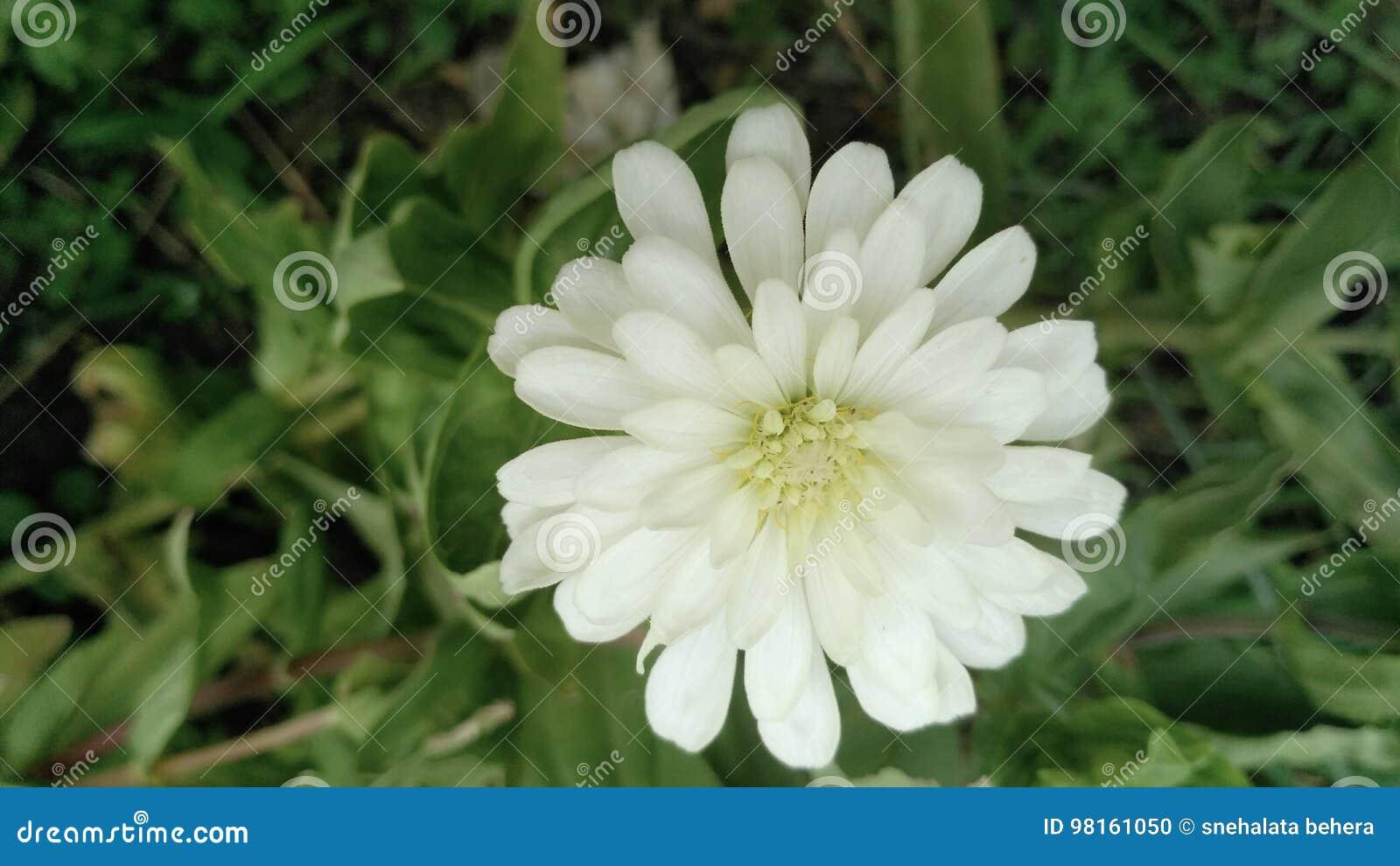 Flor nave Folhas Fundo