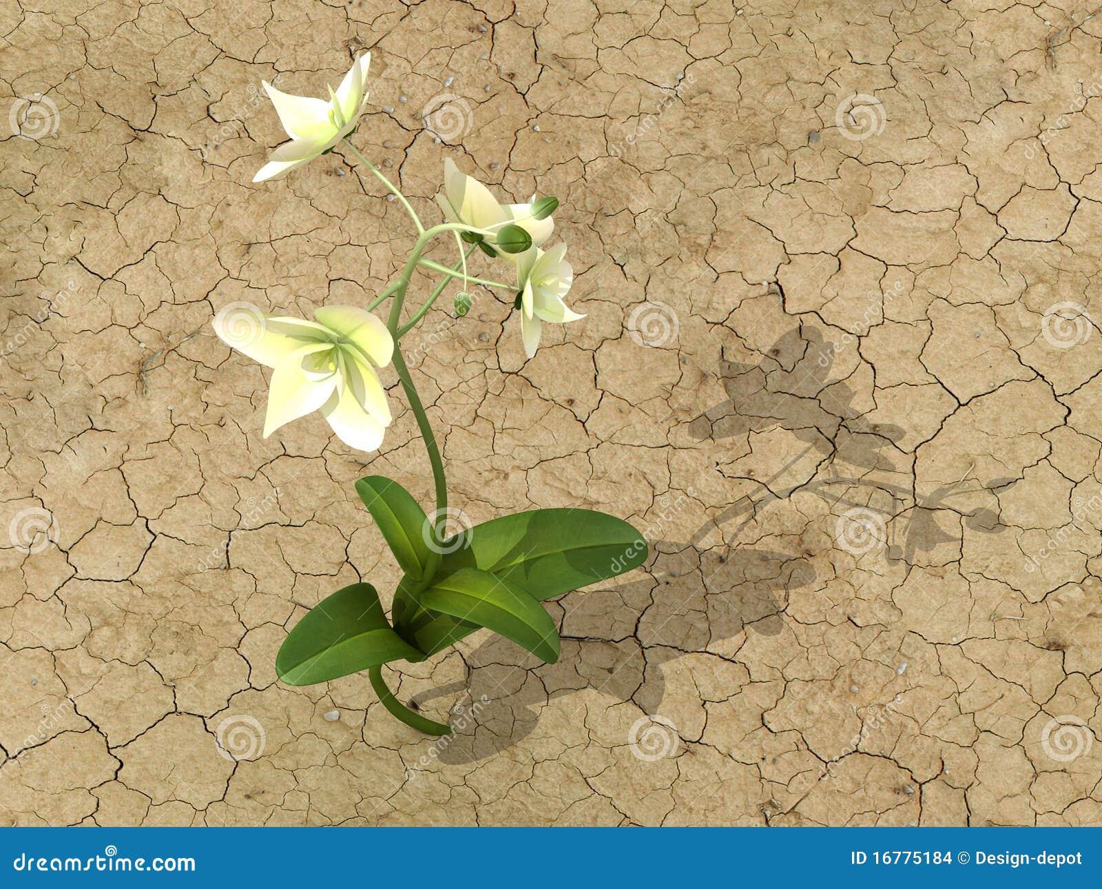 Flor No Deserto Ilustração Stock Ilustração De Sumário 16775184