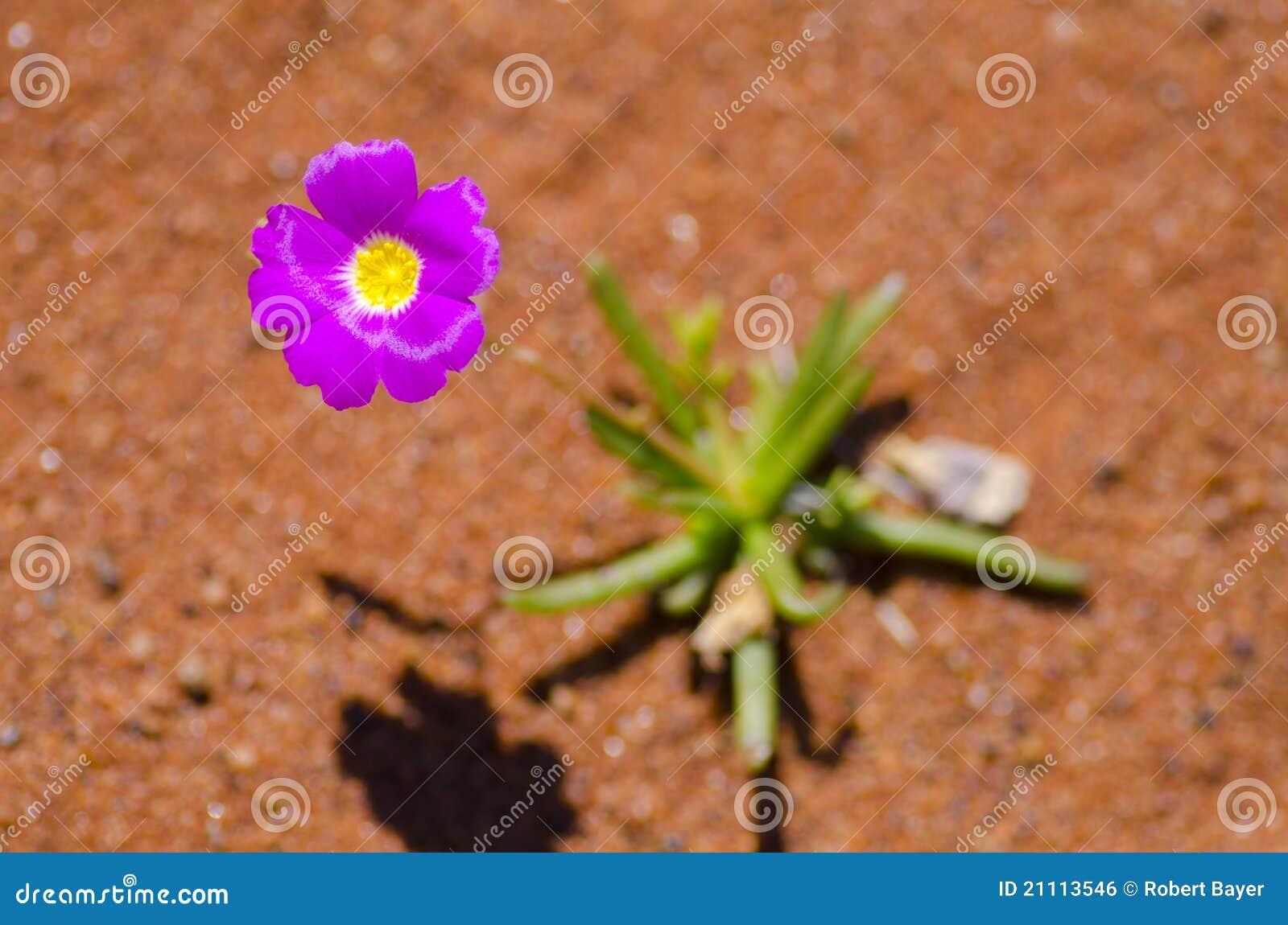 Flor No Deserto Foto De Stock Imagem De áspero Fundo 21113546