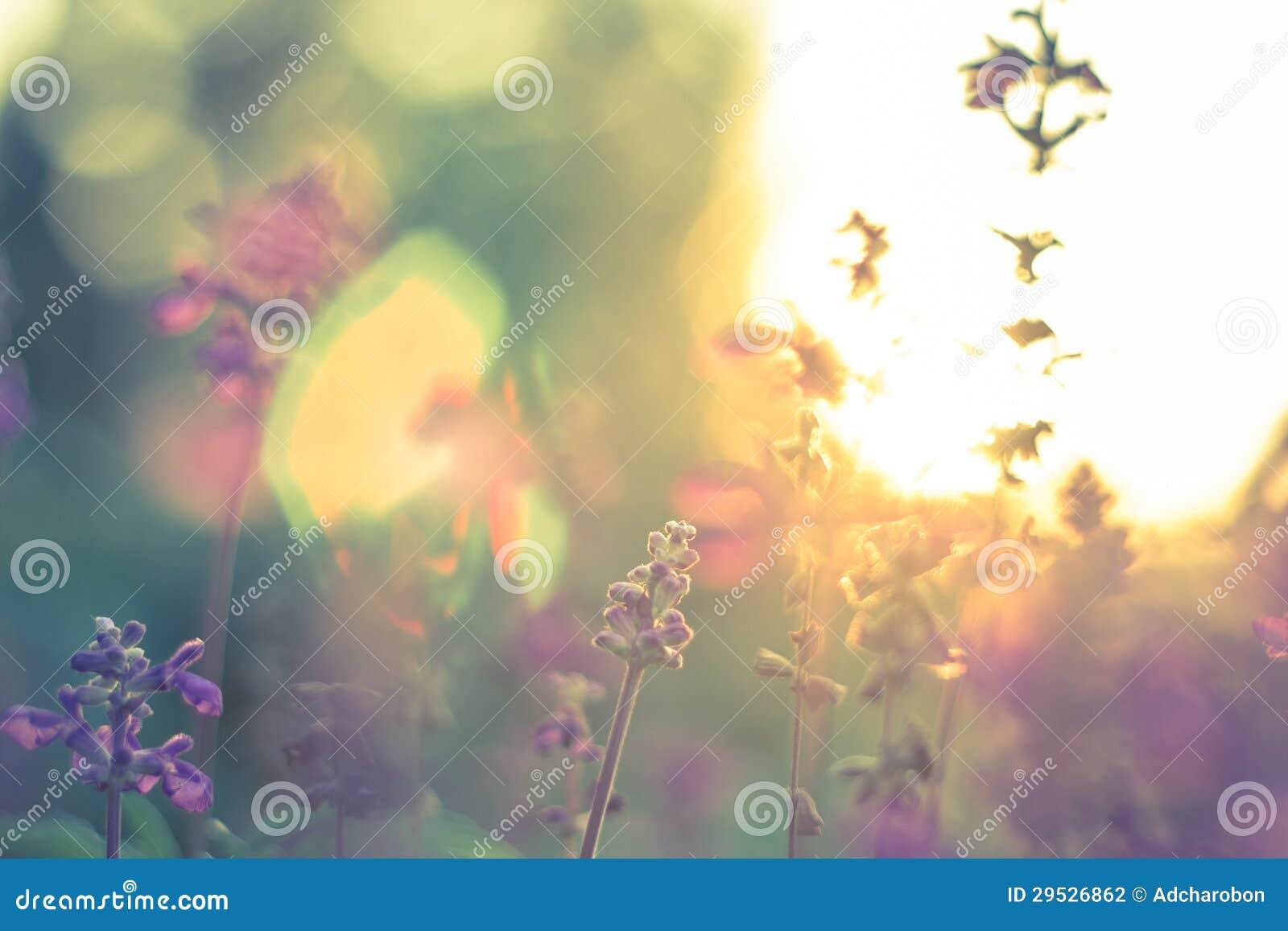 Flor no por do sol