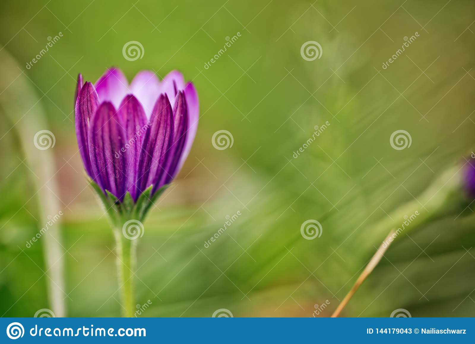 Flor no prado do verão