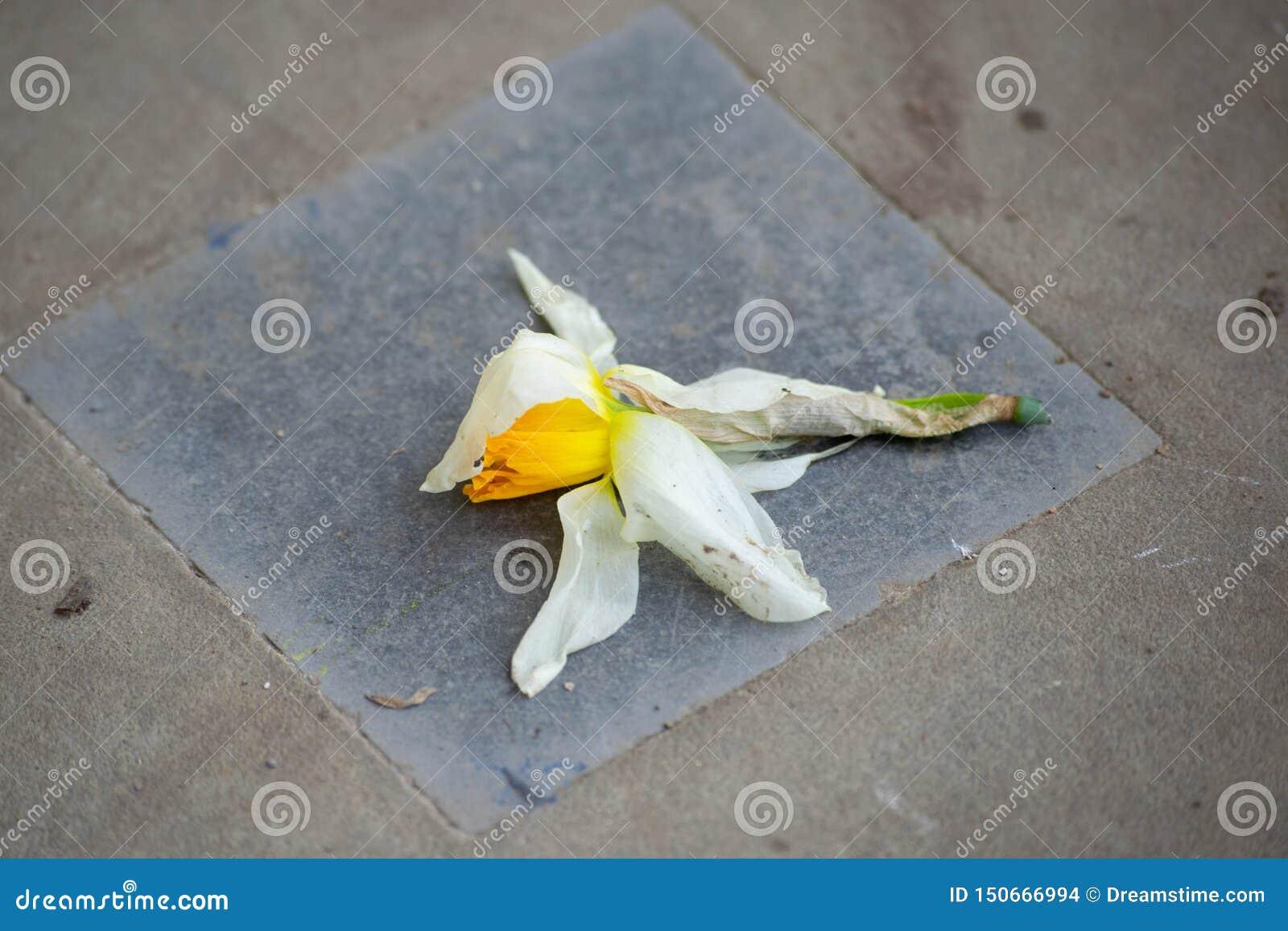 Flor olvidada en la tierra