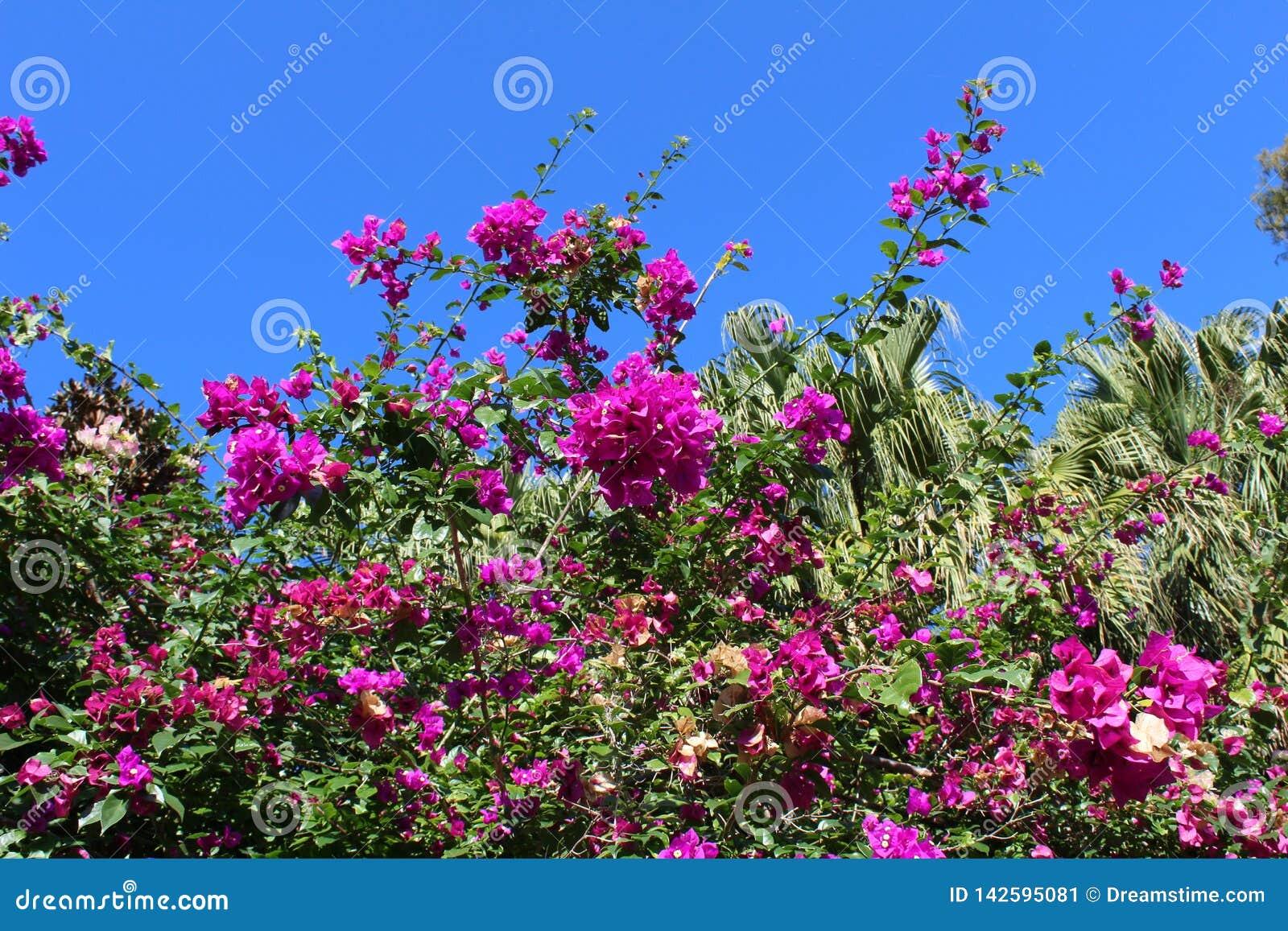 Flor púrpura en el cielo azul