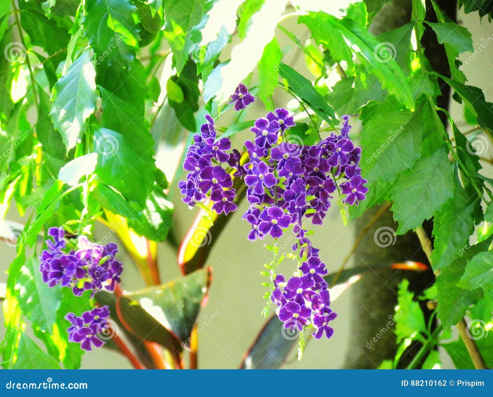 Famoso Uñas De Flores Púrpuras Patrón - Ideas Para Esmaltes - aroson.com
