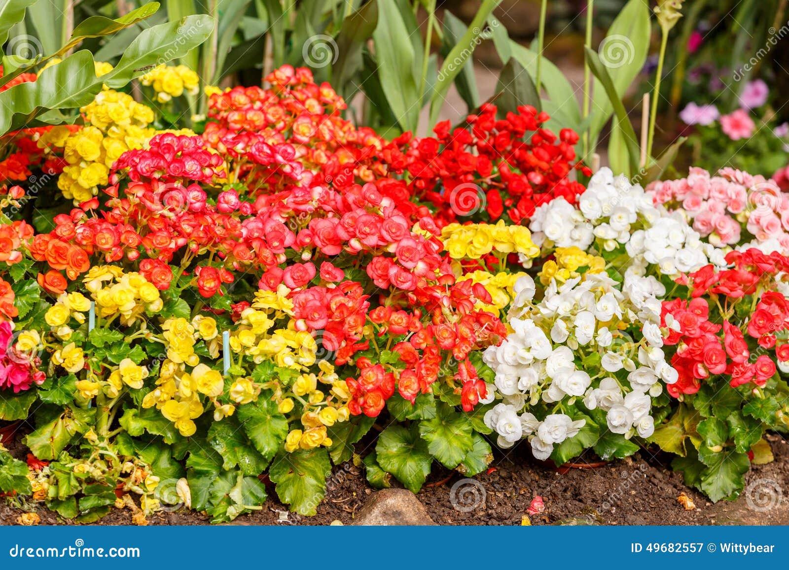 Favoritos Flor Pequena Colorida Da Flor No Jardim Imagem de Stock - Imagem  ZN36