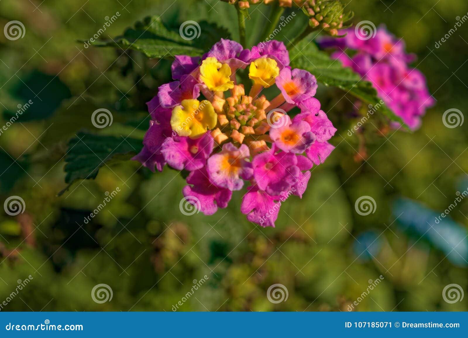 Flor pequena feita das flores menores múltiplas