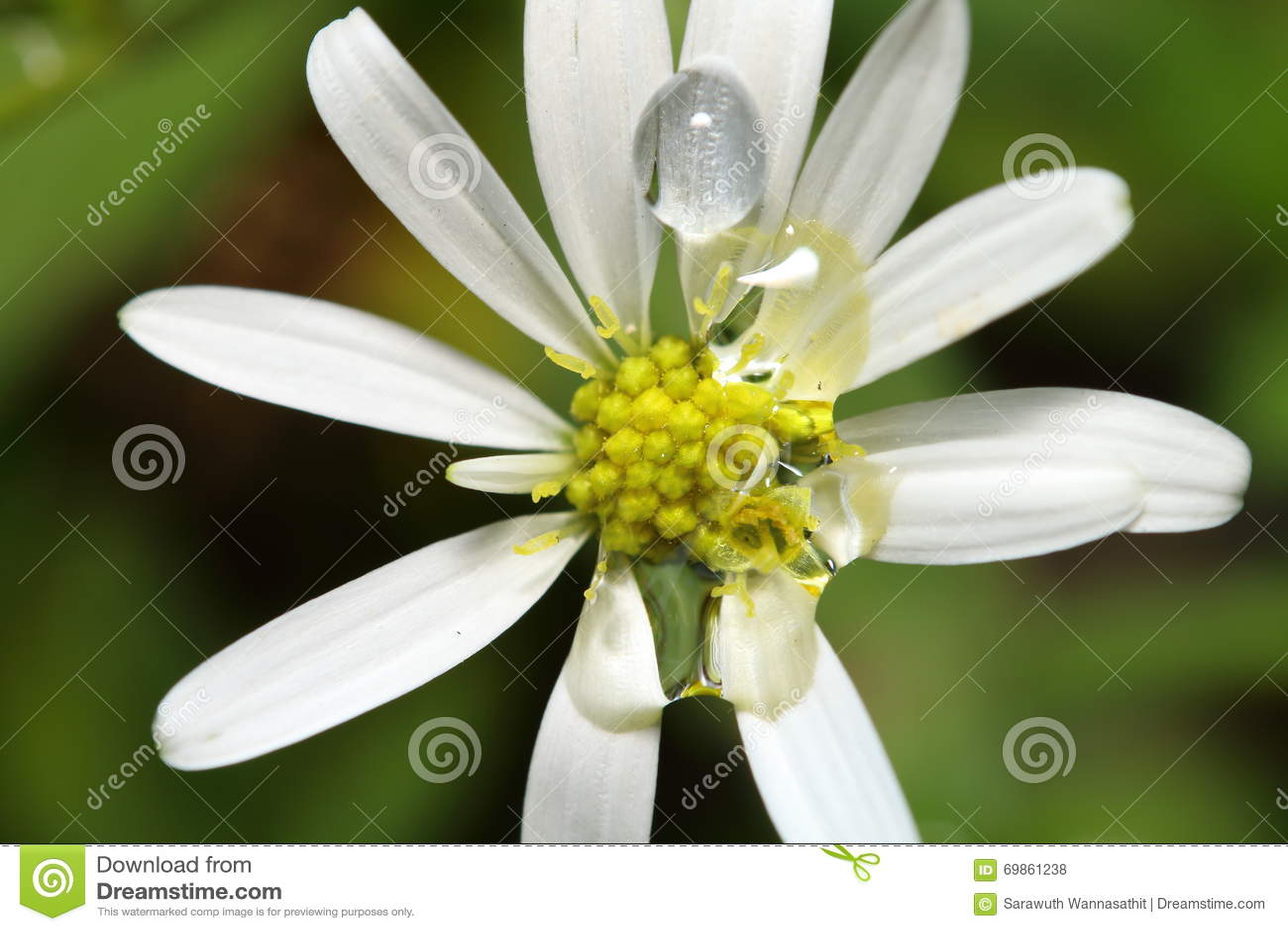 flores jardim de verao:Flor Pequena No Jardim Foto de Stock – Imagem: 69861238