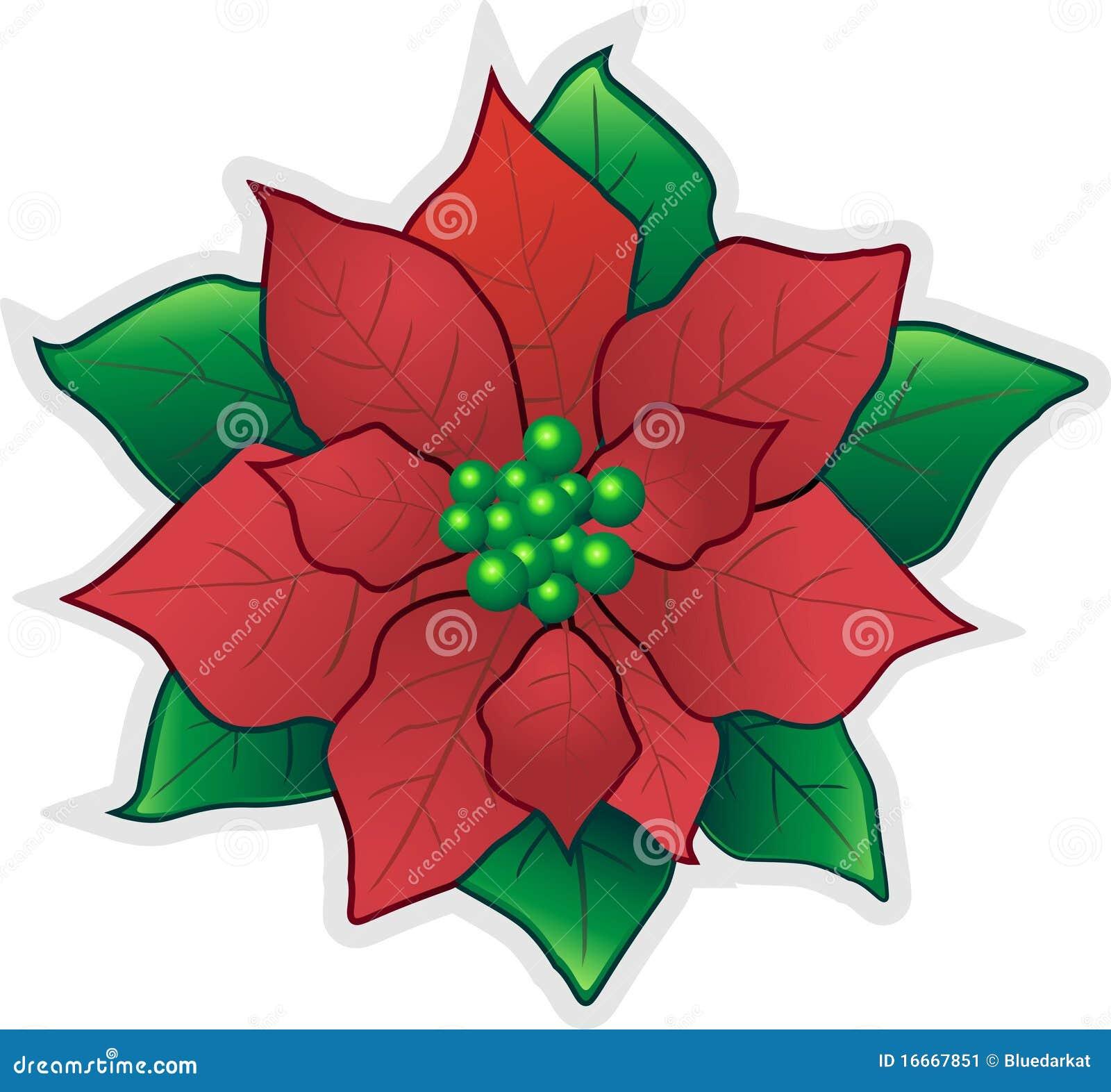 Flor poinsettia rojo de la navidad ilustraci n del vector - Imagenes flores de navidad ...