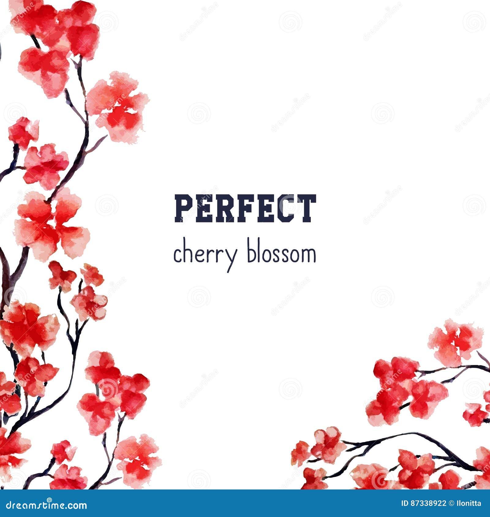 Flor realista de Sakura - cerezo rojo japonés aislado en el fondo blanco Pintura de la acuarela del vector truncamiento