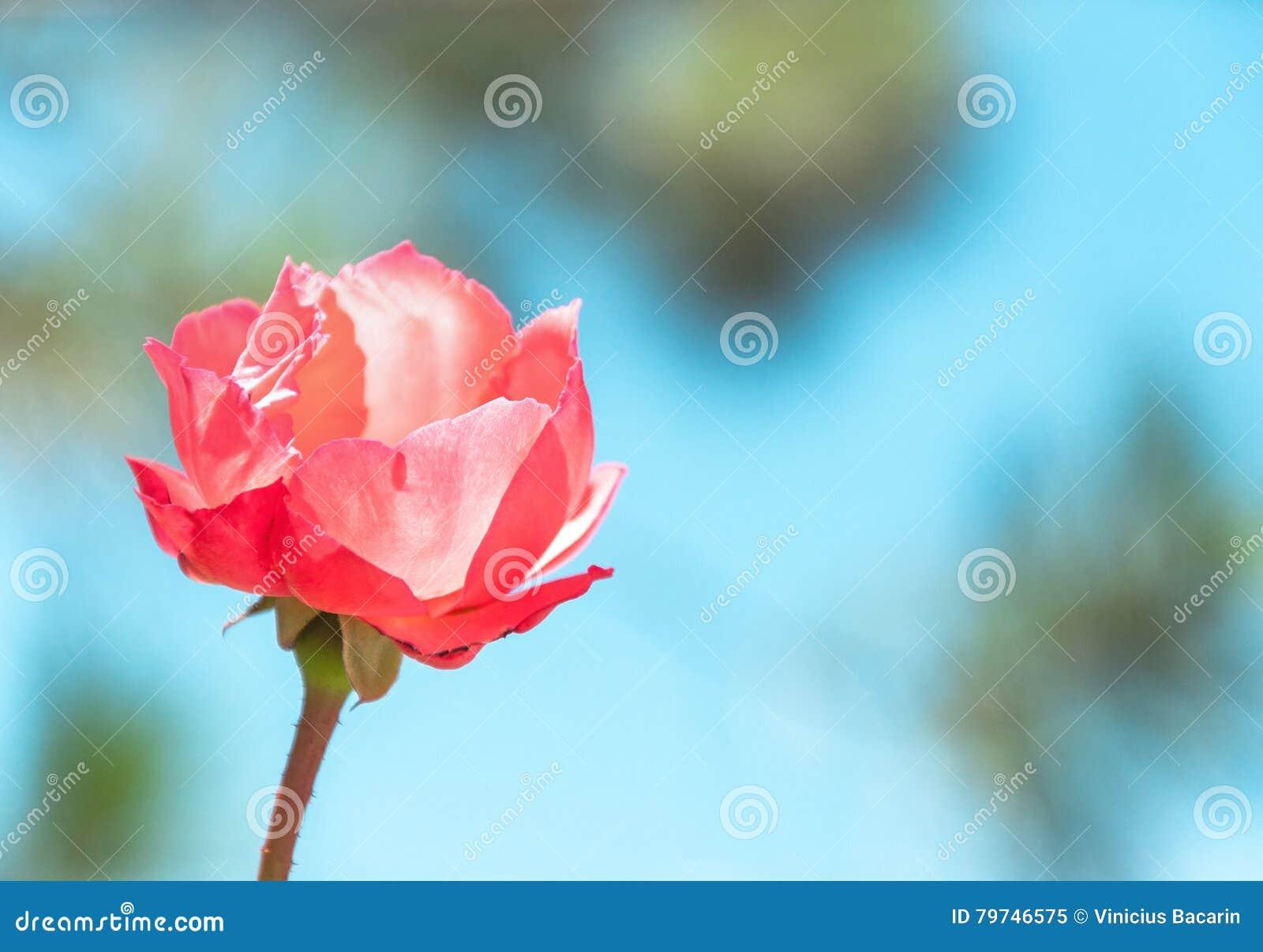 Flor roja con el fondo borroso de la naturaleza