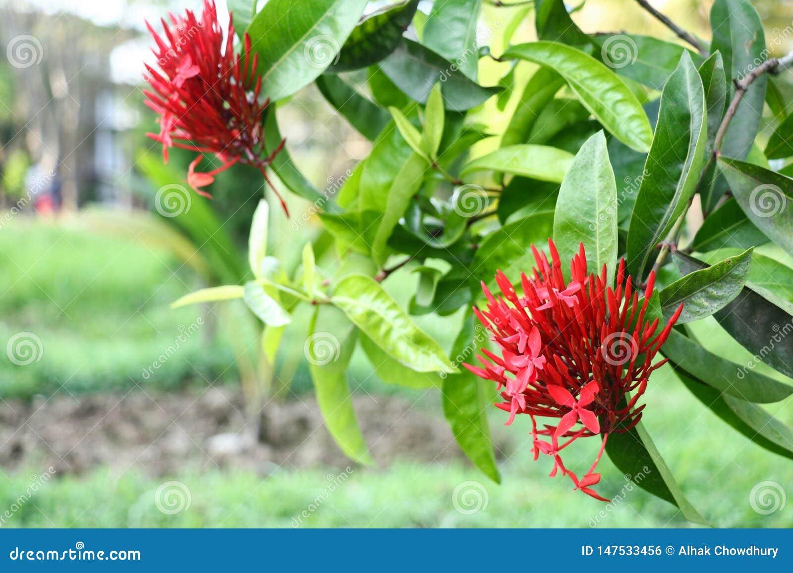 Flor roja en las hojas verdes