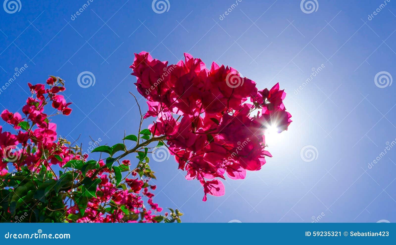 Flor rosada con la sol que se rompe a través