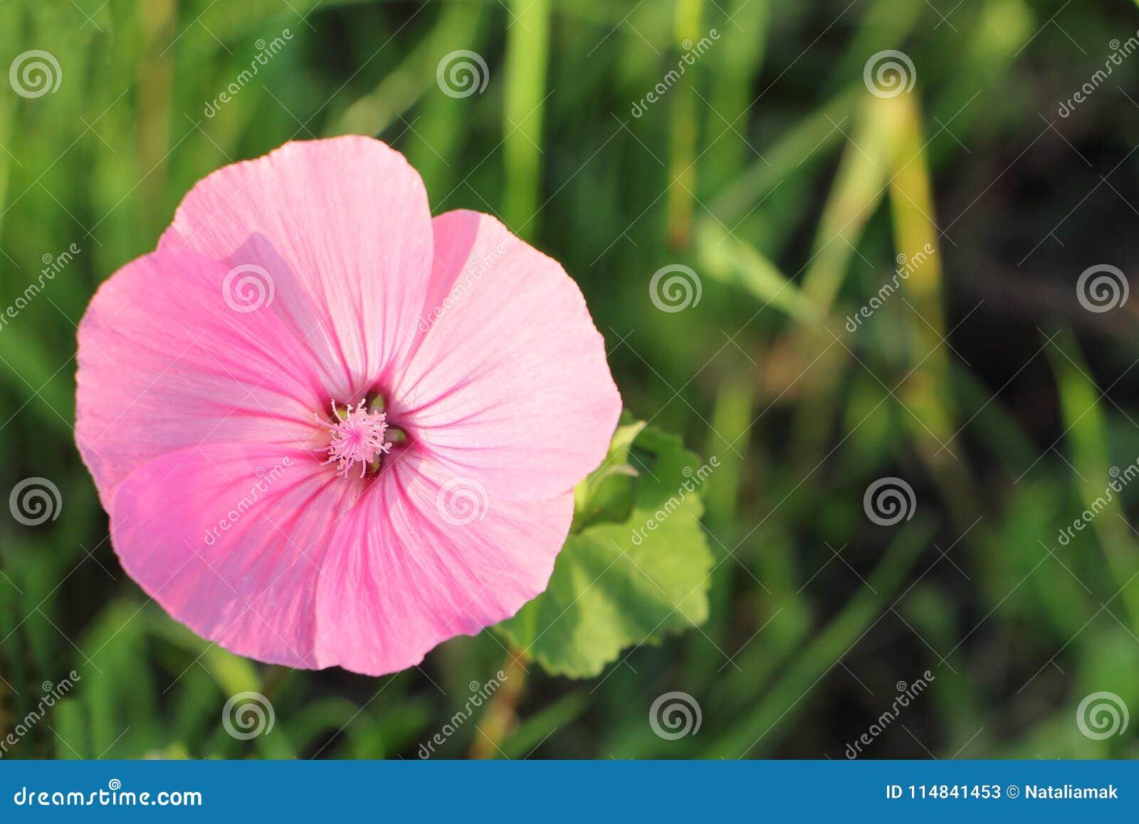 Vistoso Flores Fotos Del Arte Del Uña Adorno - Ideas de Pintar de ...