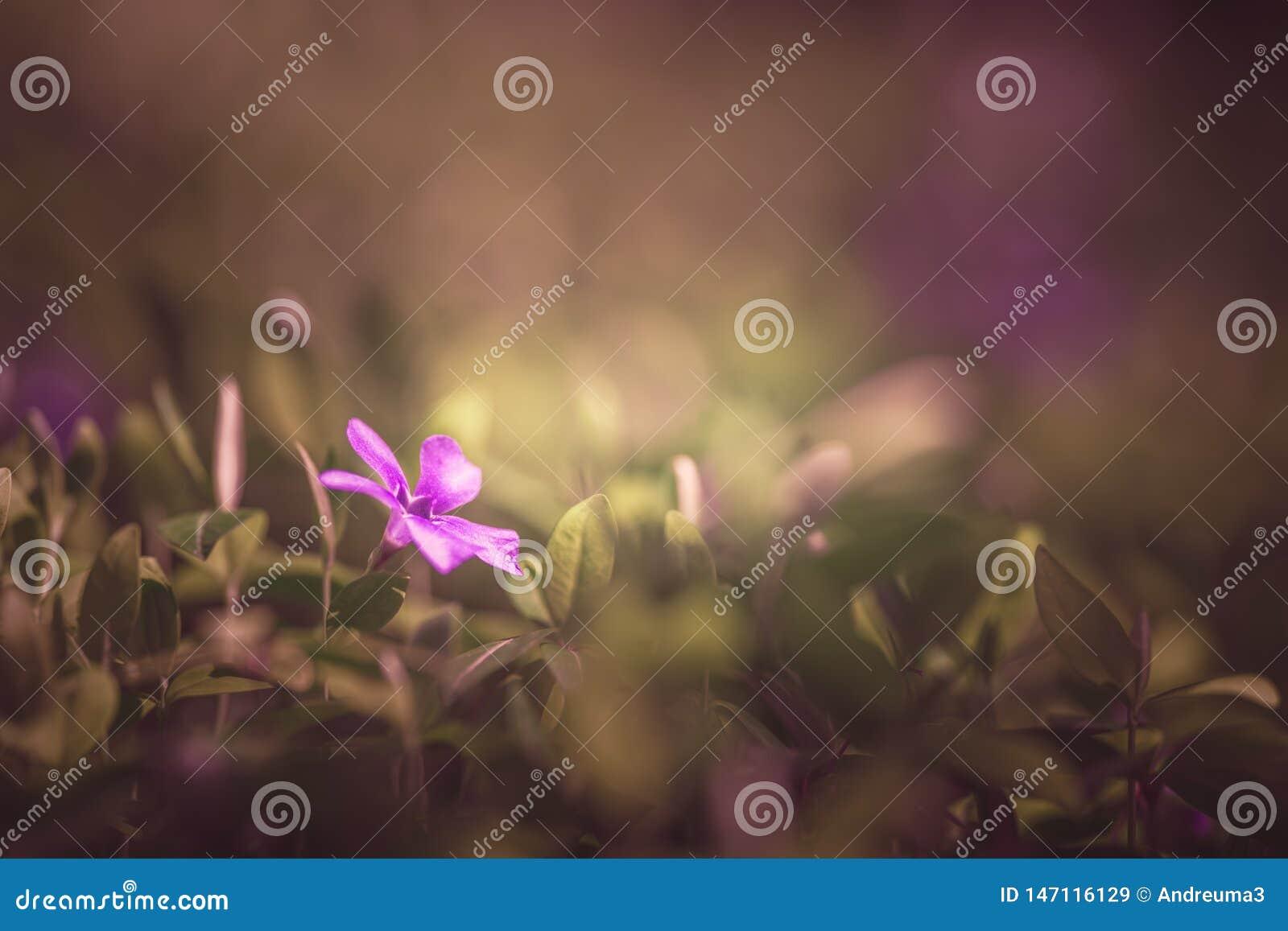 Flor rosada solitaria