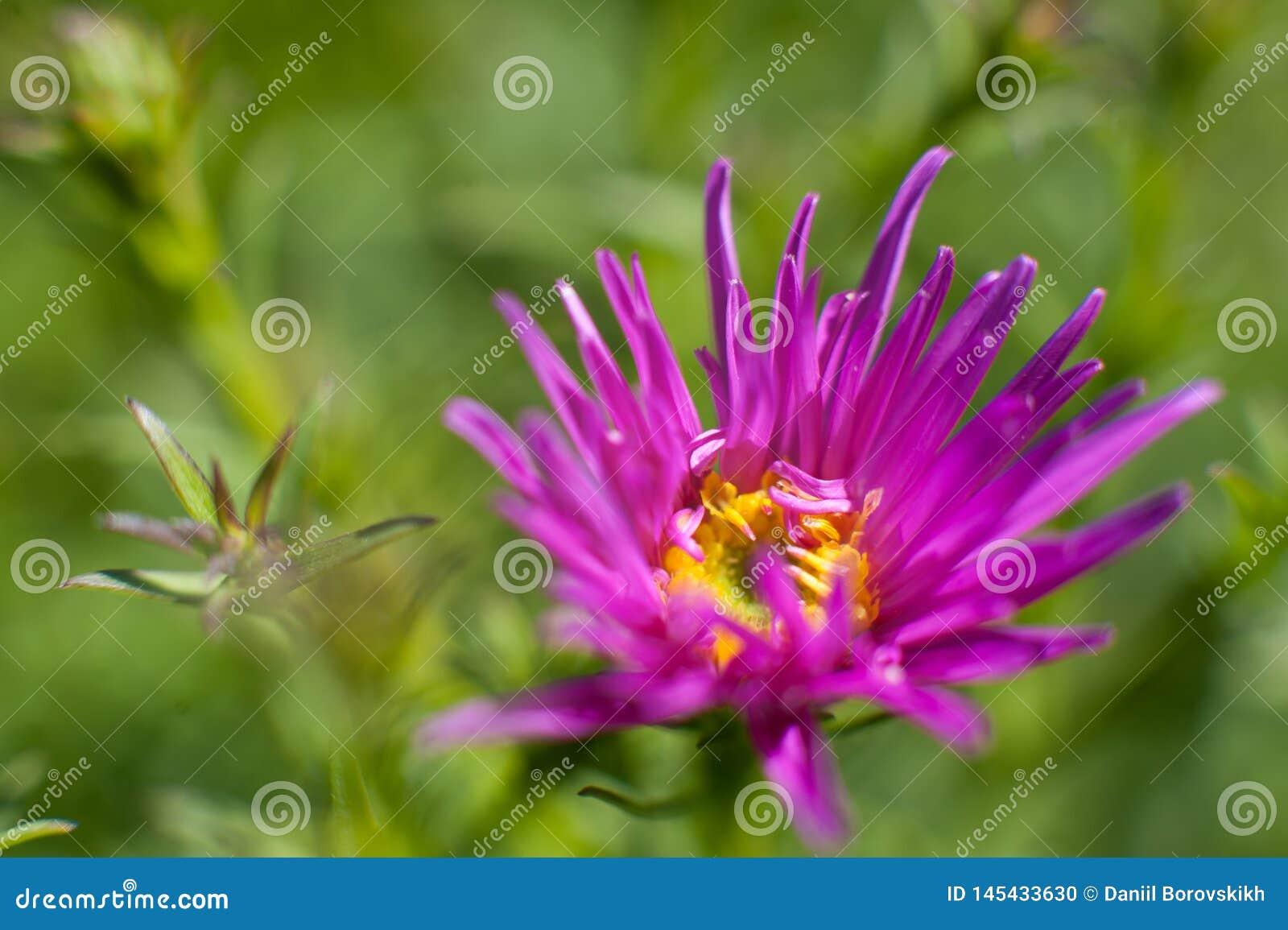 Flor roxa no fundo verde