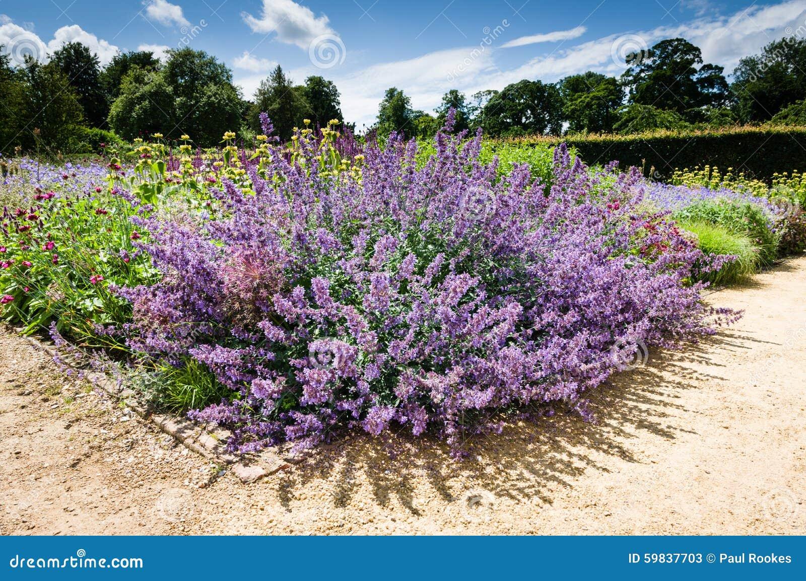 Flor roxa planta constante plantas de jardim foto de for Arbol perenne para jardin