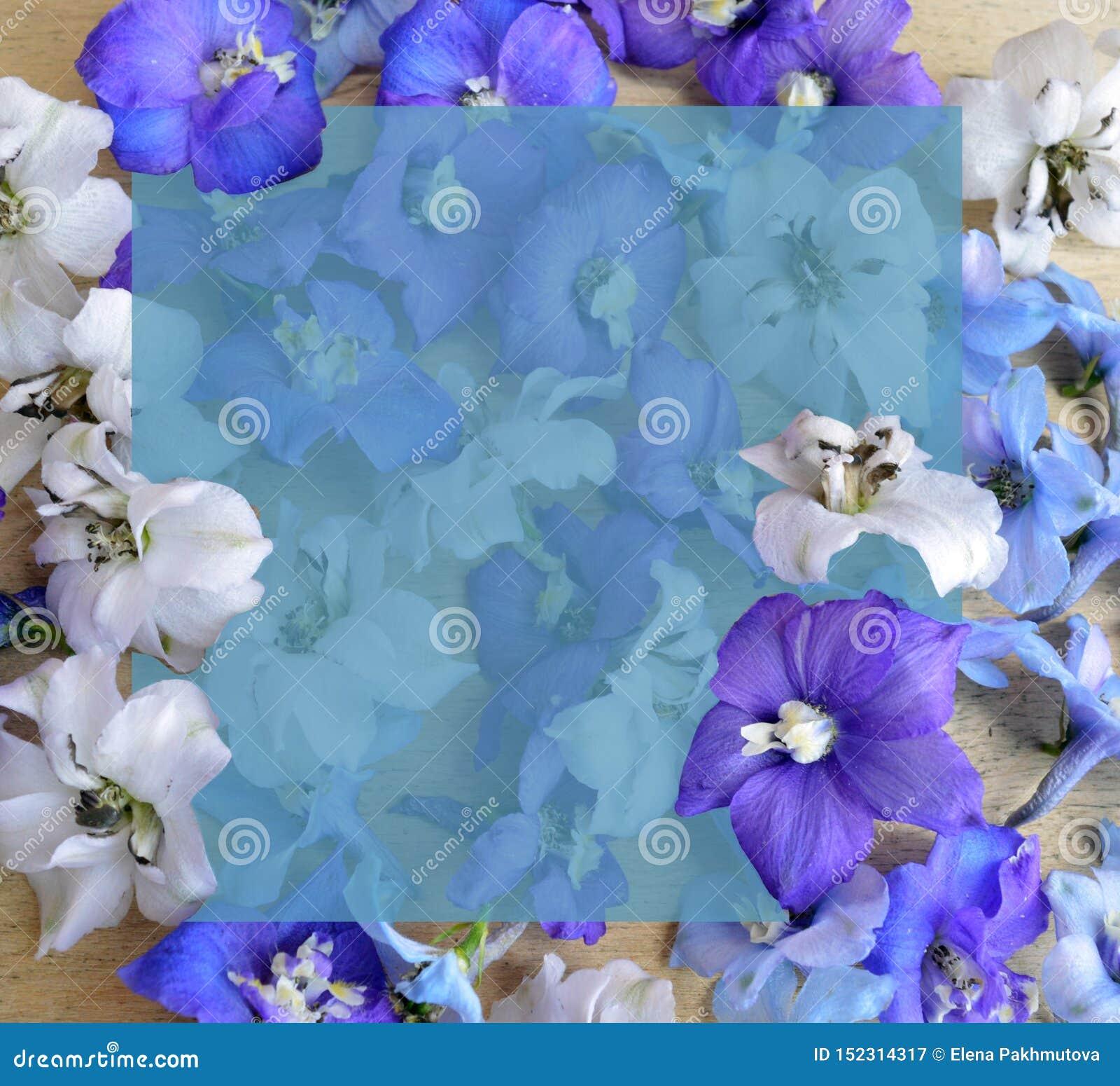 Flor, roxo, mola, natureza, roxo, flores, azul, planta, florescendo, flor, floral, jardim, floral, branco, pétala, isolada,