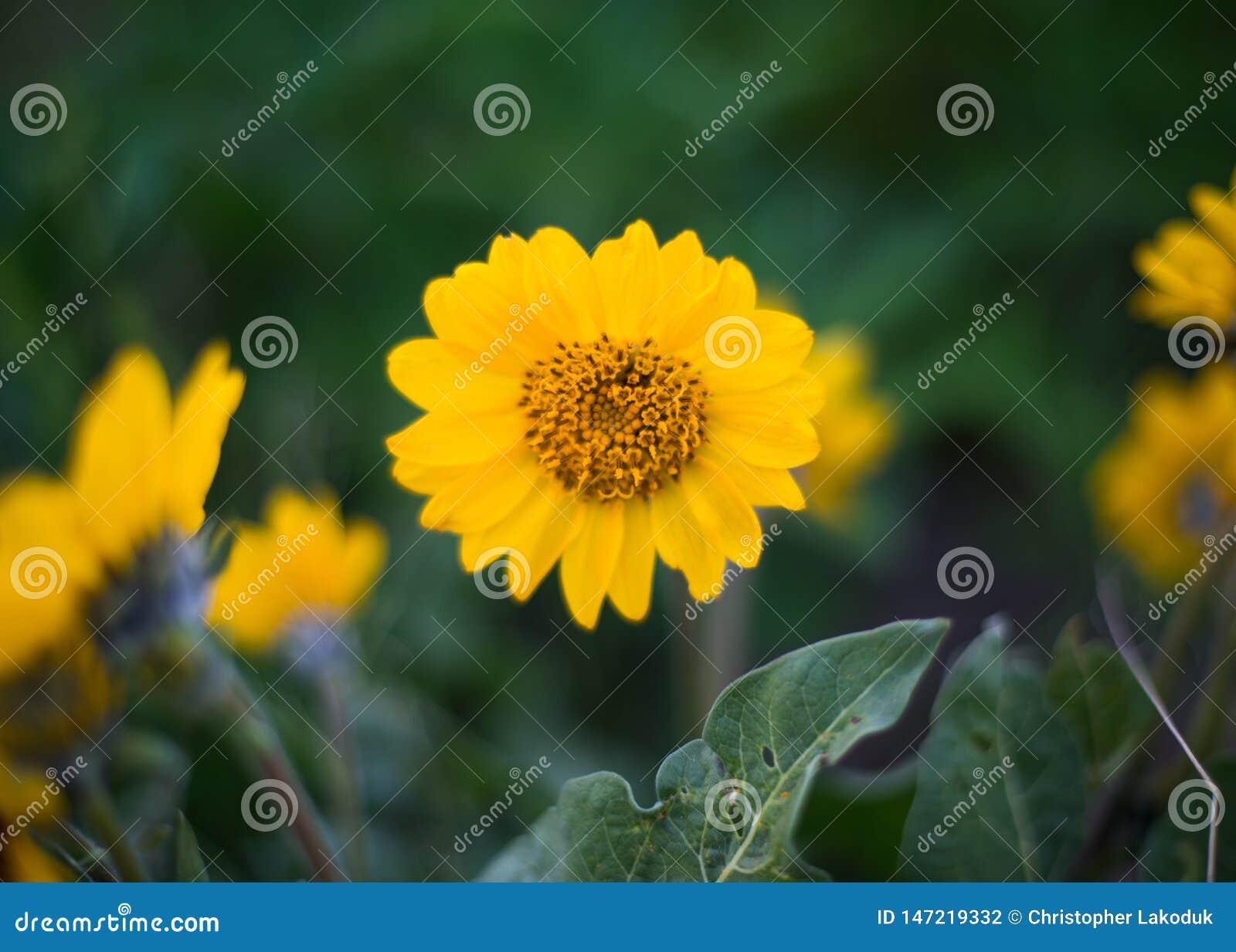 Flor salvaje amarilla con follaje verde