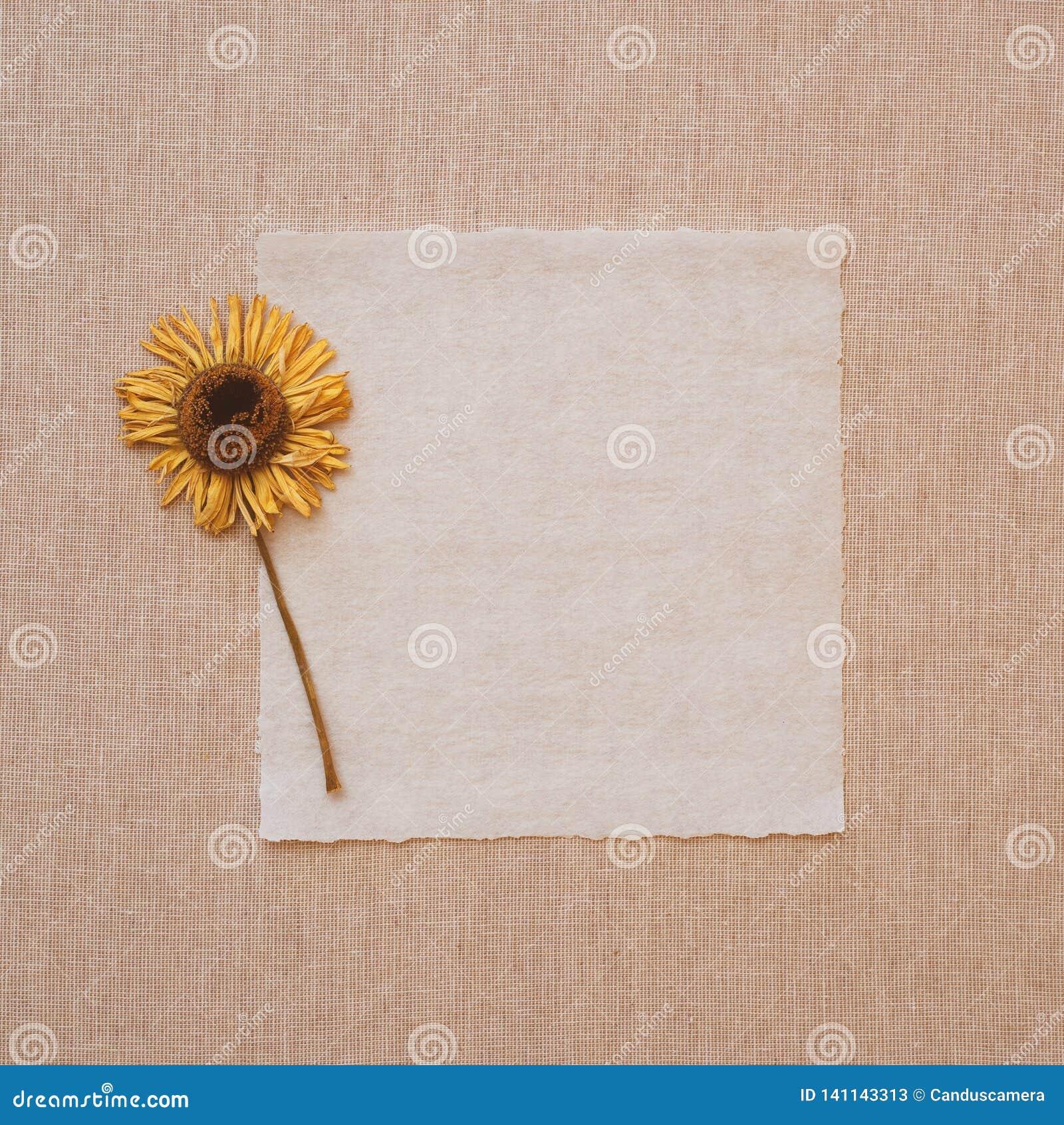 Flor secada amarilla en tarjeta de nota vieja del papel de pergamino en el mantel de lino beige Es en blanco para la copia, el te