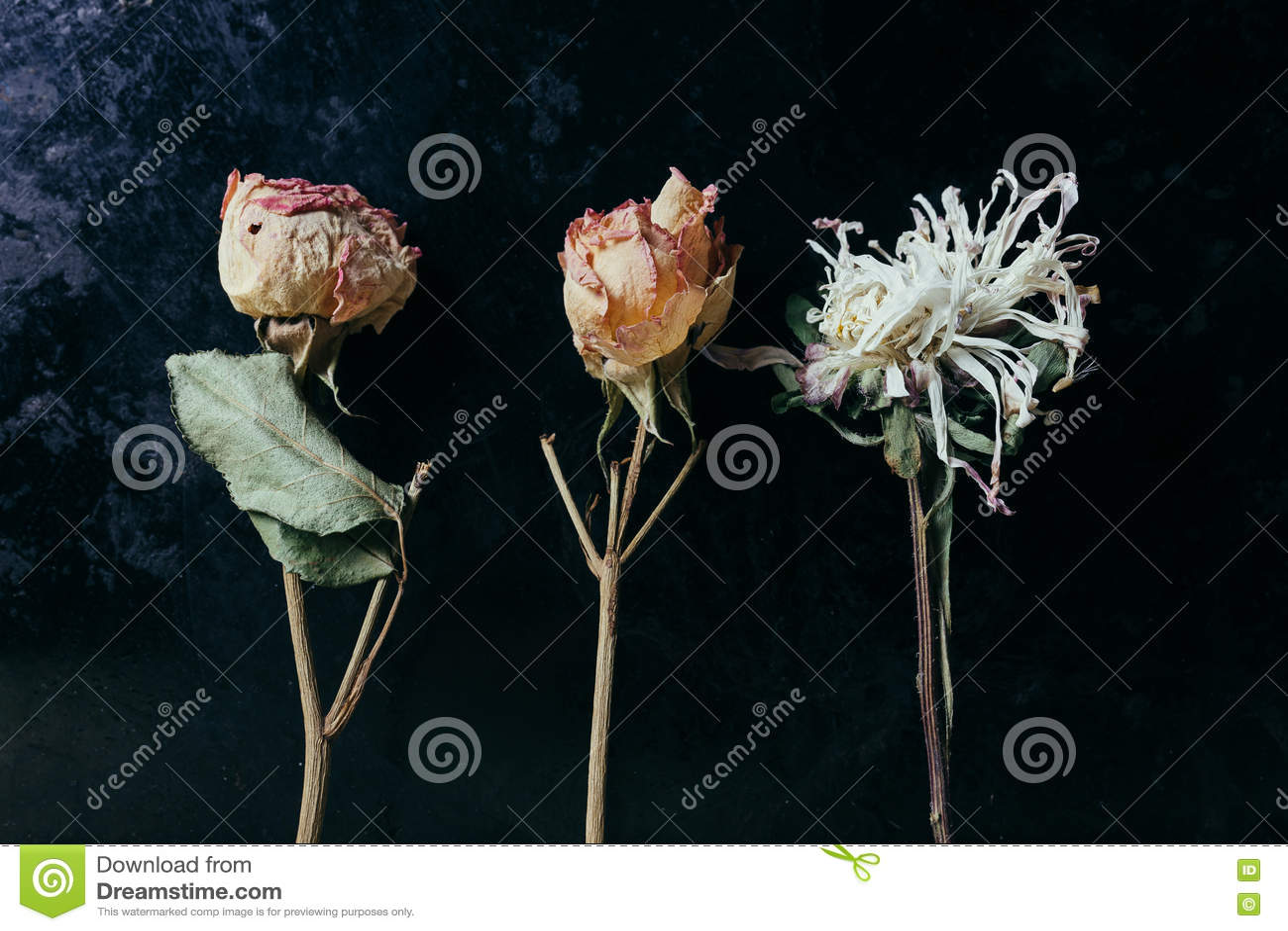 Flor secada sobre viejo fondo negro del metal