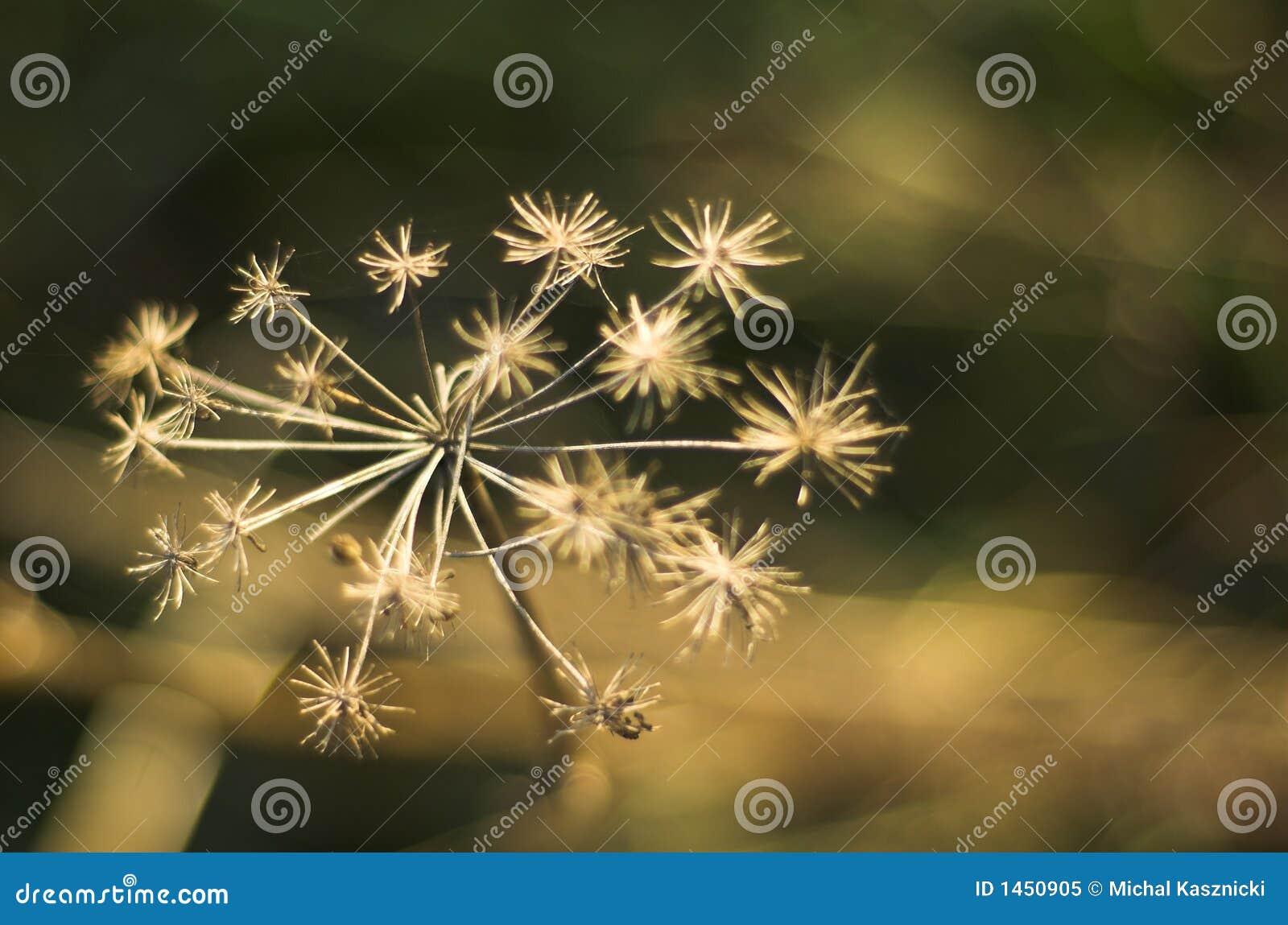 Flor sin savia de la foto