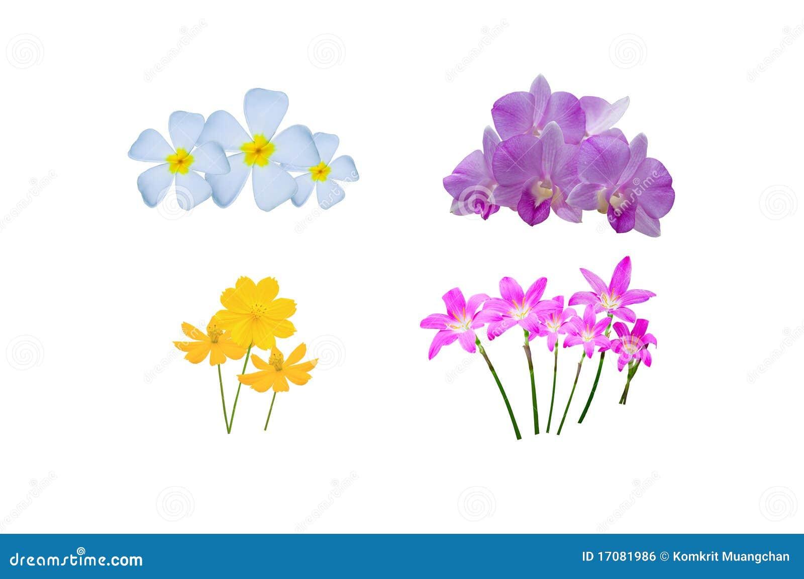 Flor tailandesa hermosa