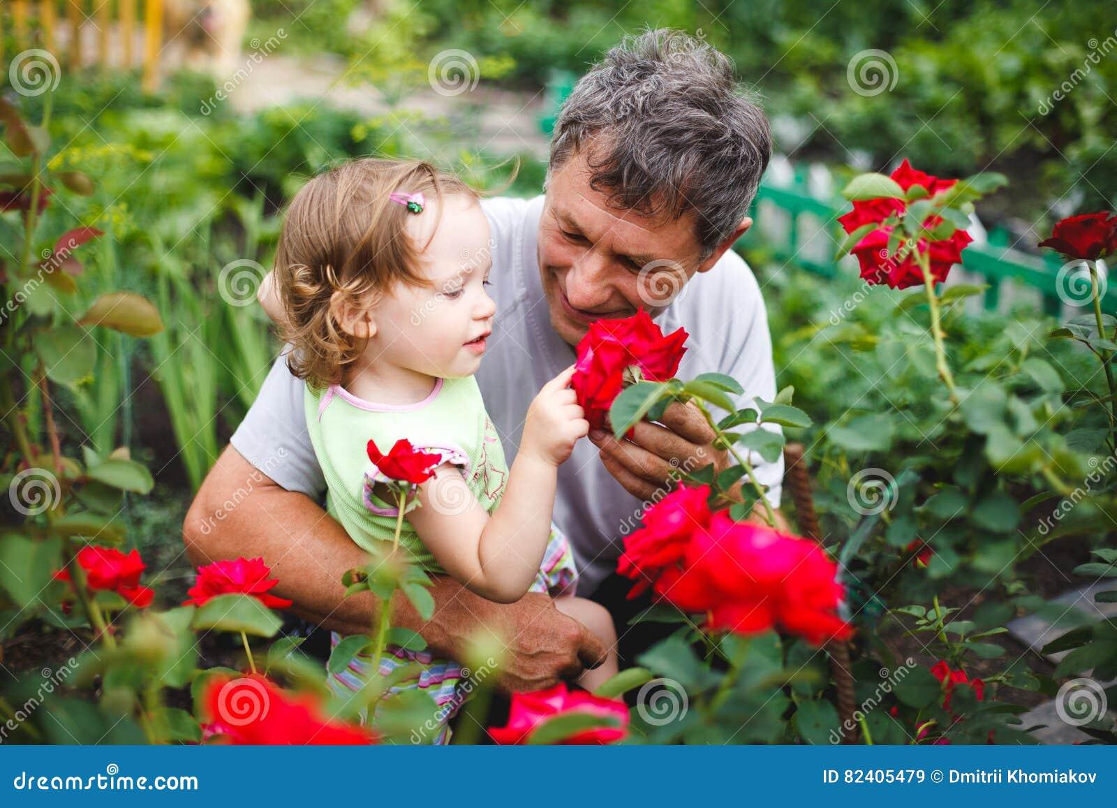 Flor tocante da menina com o avô no jardim das rosas