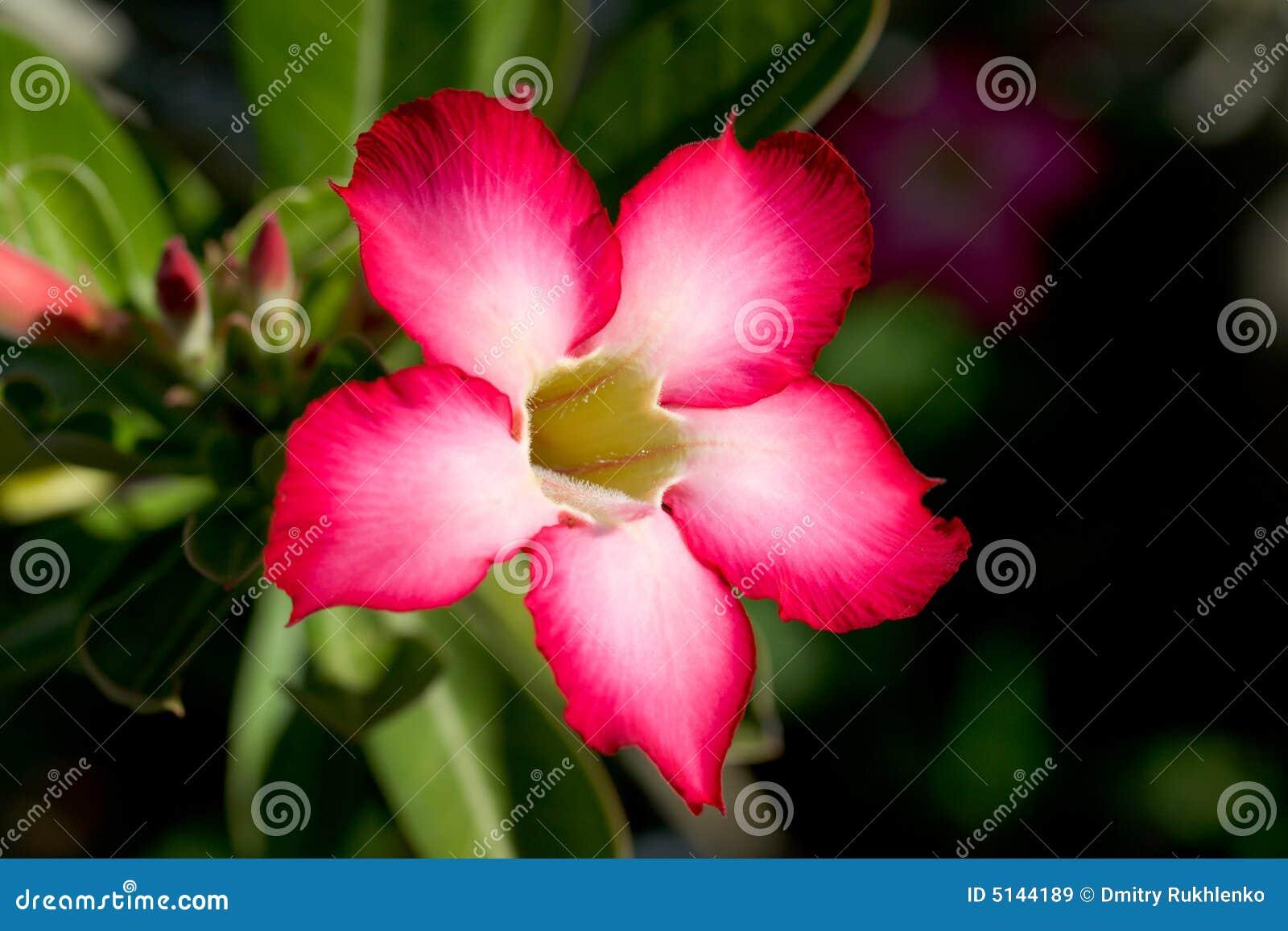 Flor tropical roja