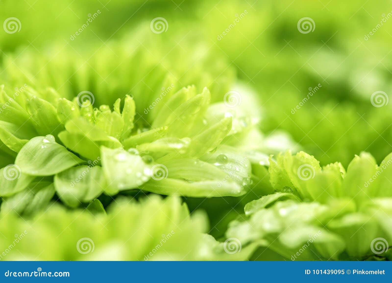 Flor verde fresca macia para o fundo sonhador romântico do amor, f
