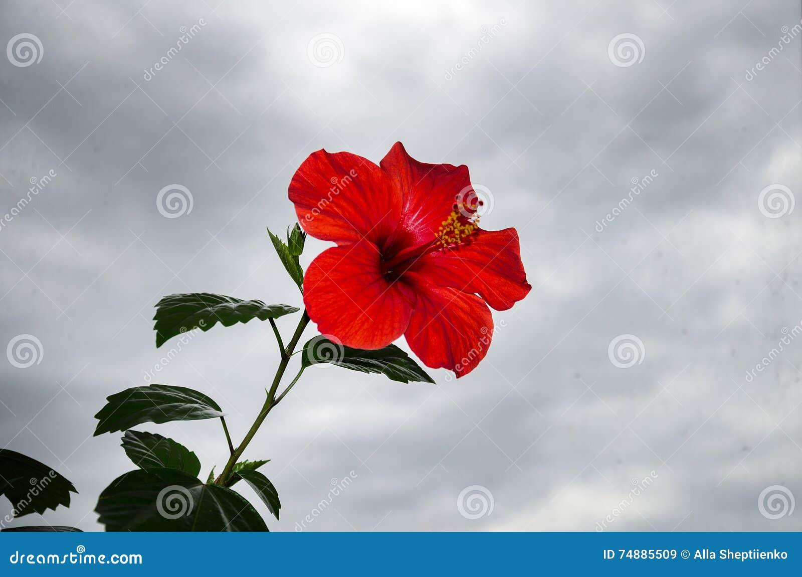 Flor vermelha bonita