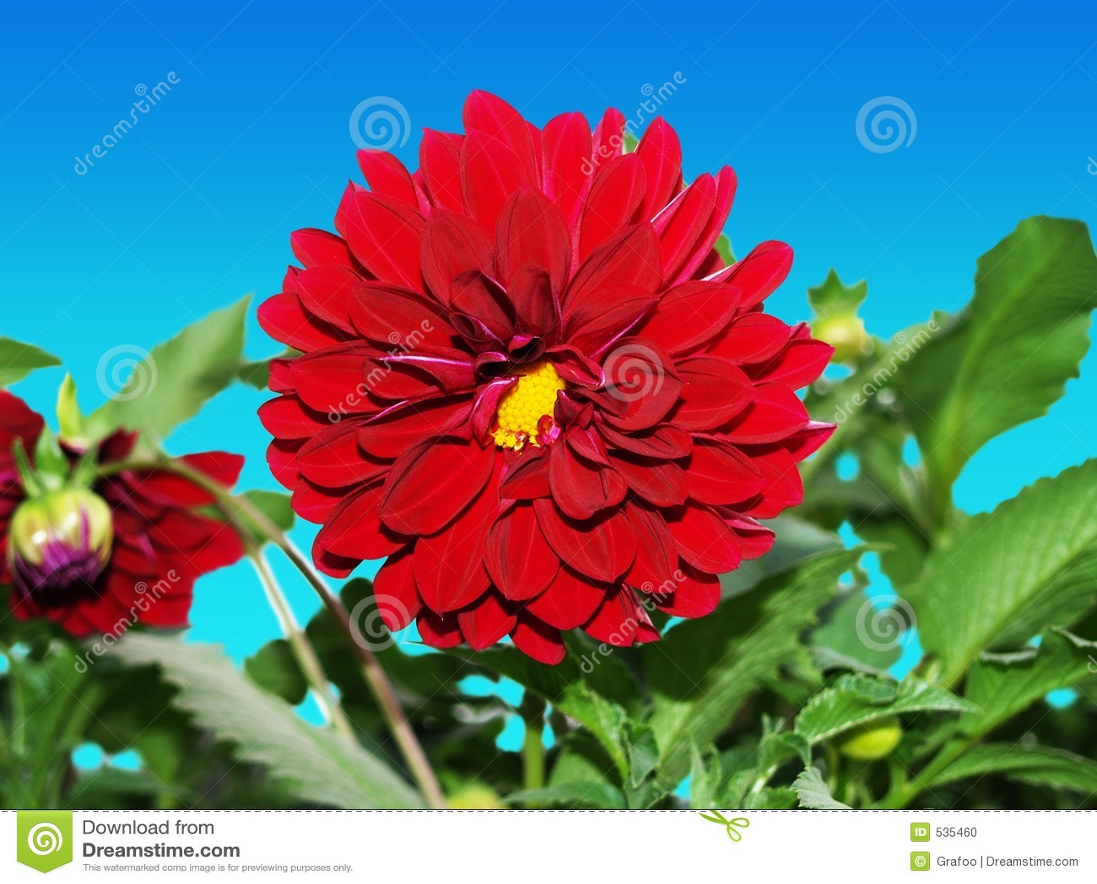 Flor vermelha bonita (ClipPath)