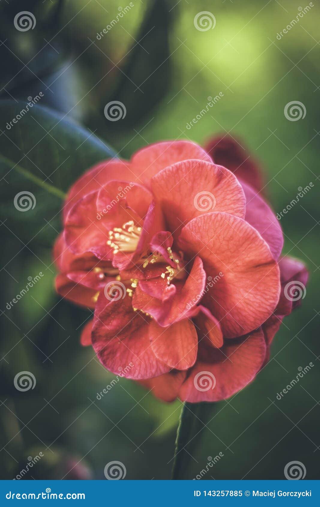 Flor vermelha em um fundo verde