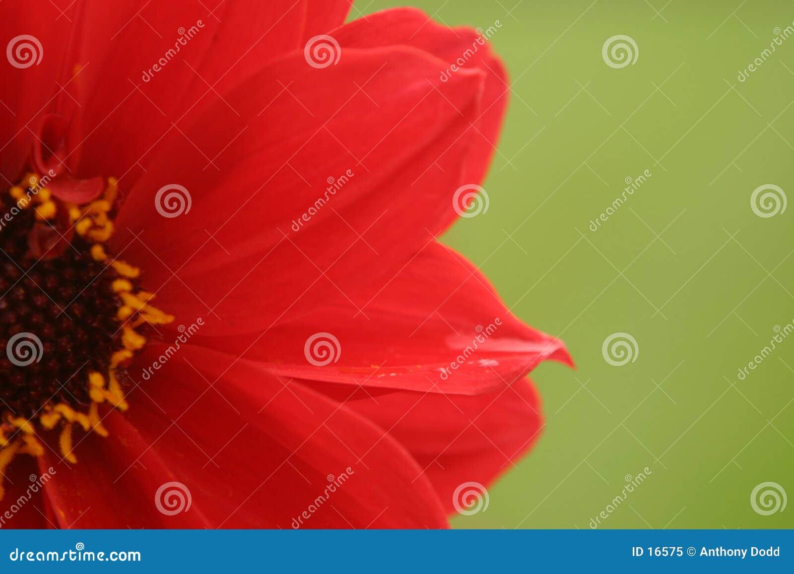 Flor vermelha, fundo verde