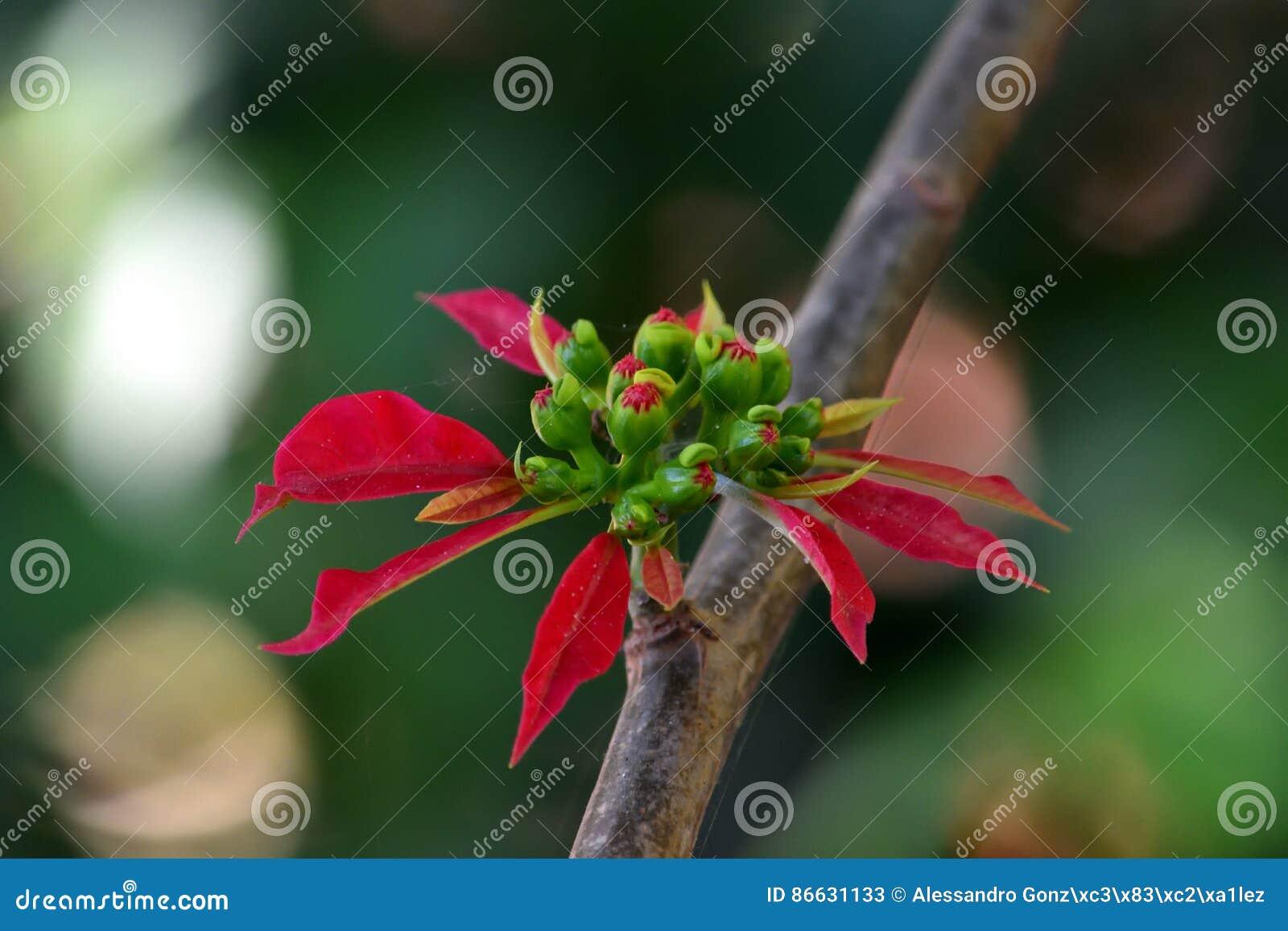 Flor vermelha só