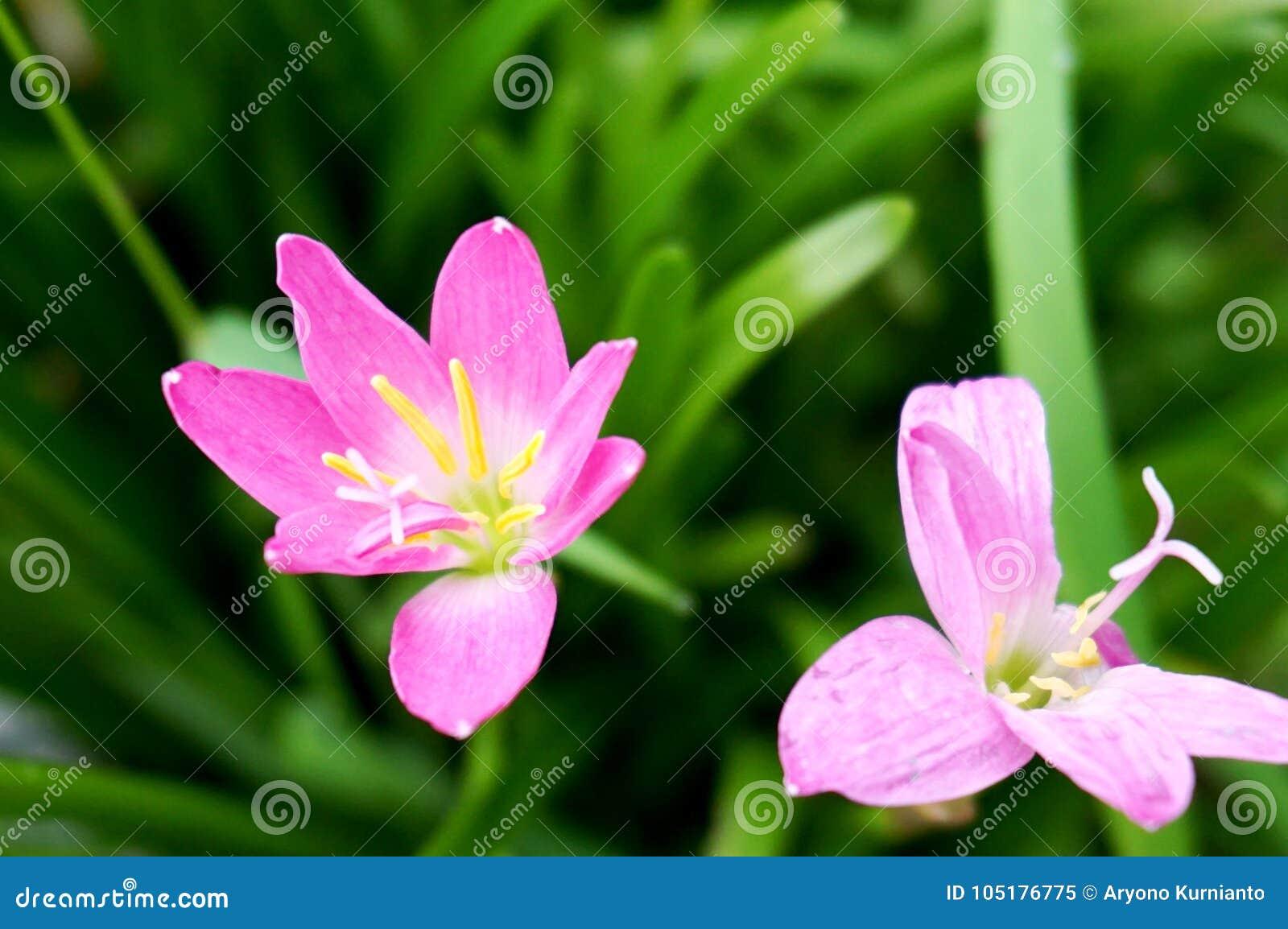 Flor violeta suave con el fondo de la hierba verde