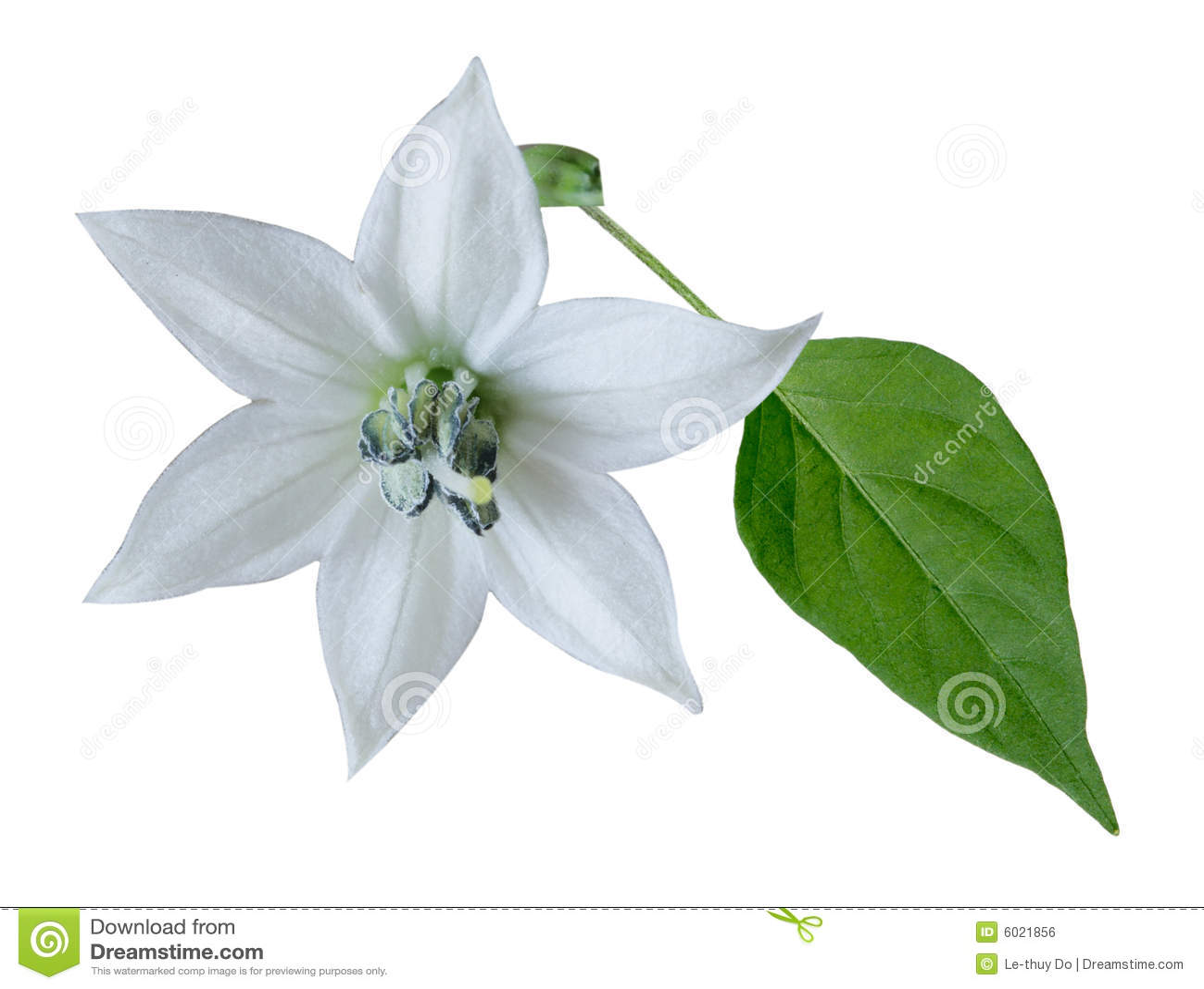 hoja y flor: