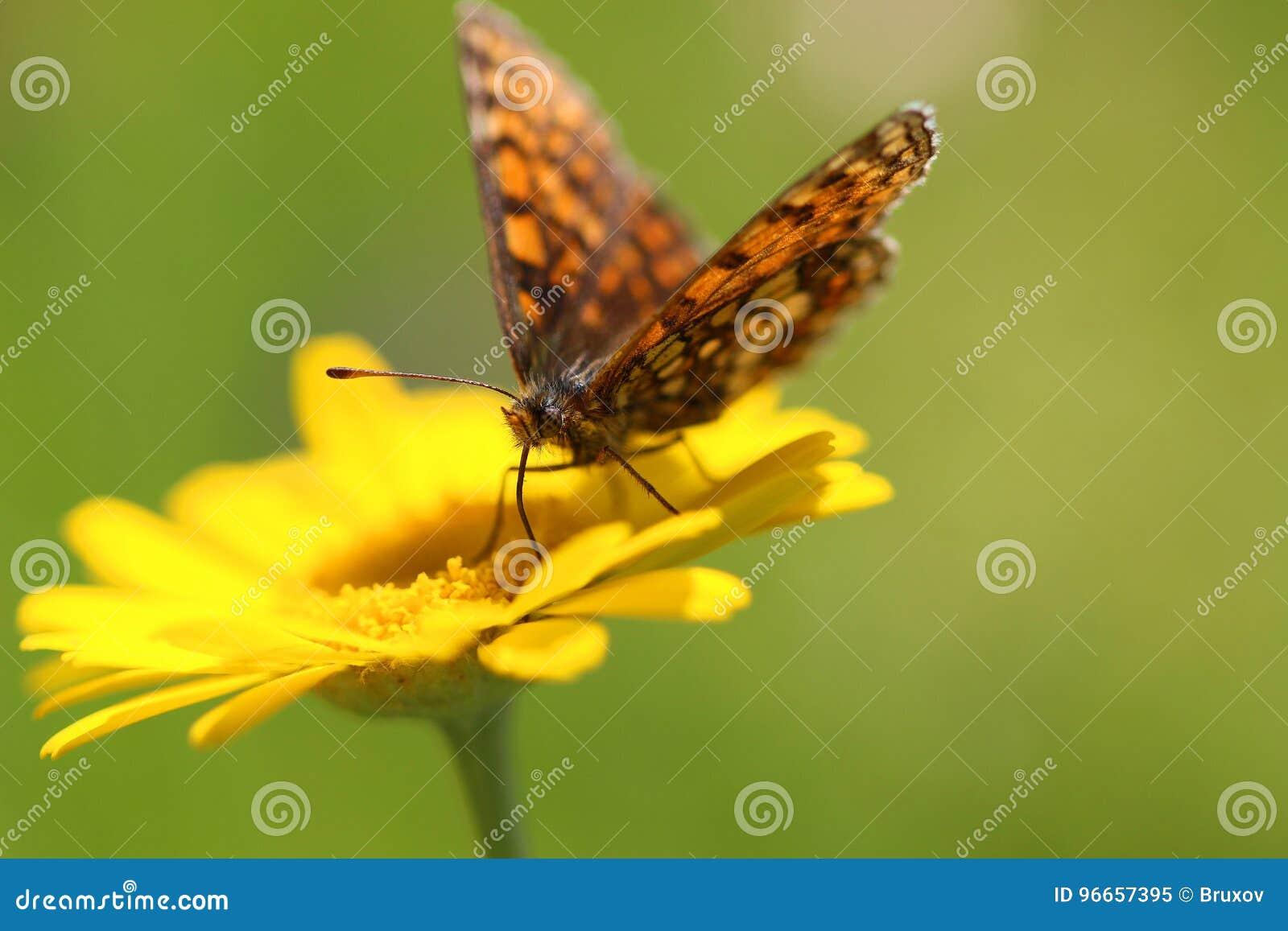 Flor y mariposa amarillas