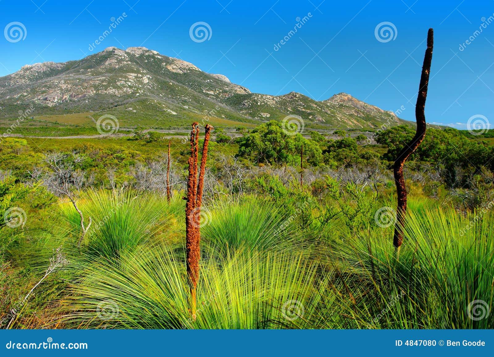 Flora australiana