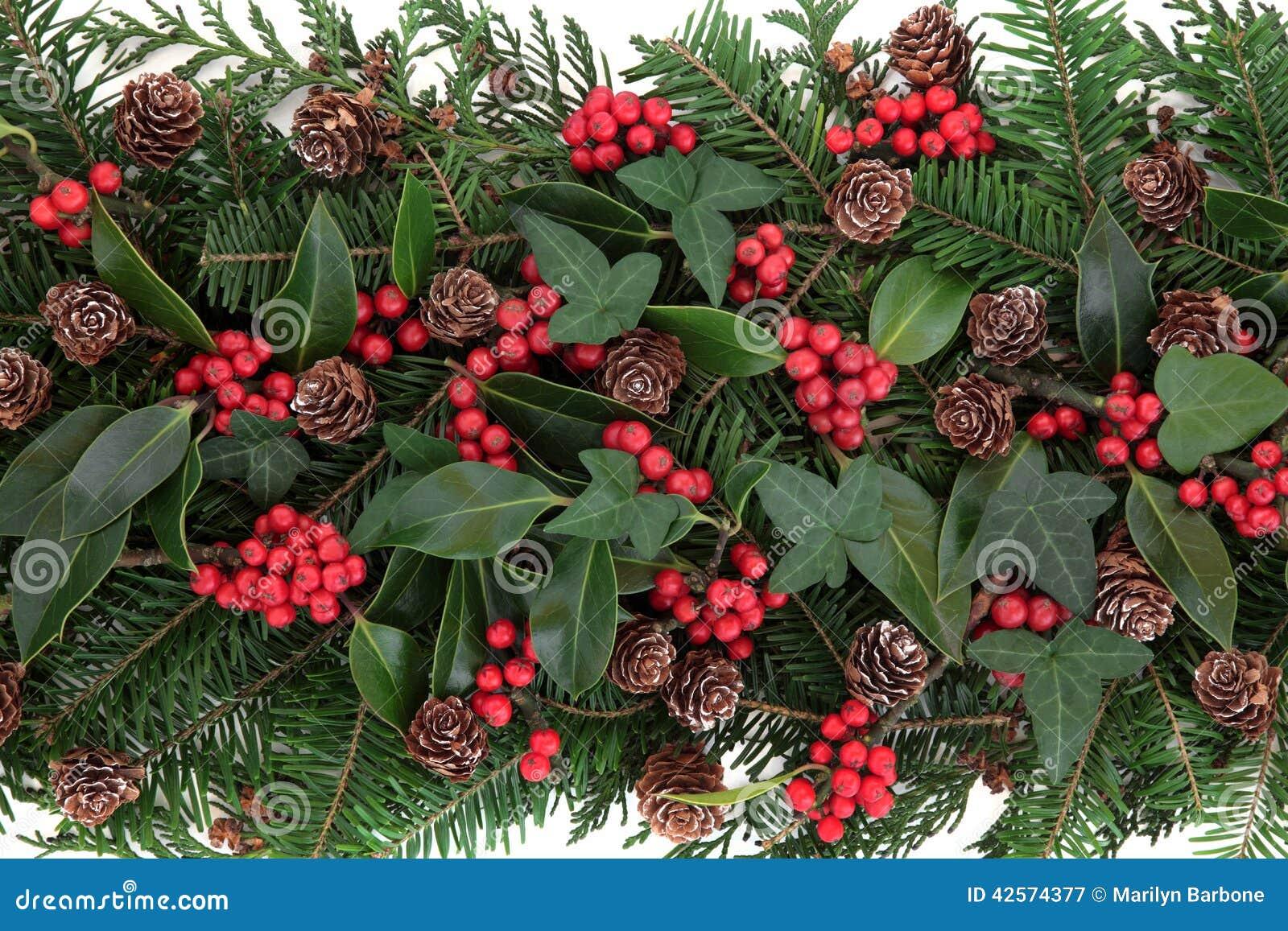 Flora do inverno