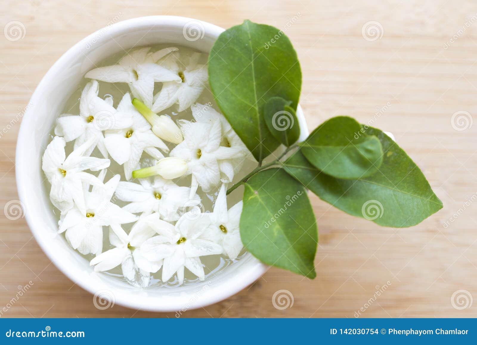 Flora do jasmim das flores brancas local do flutuador de Ásia na água