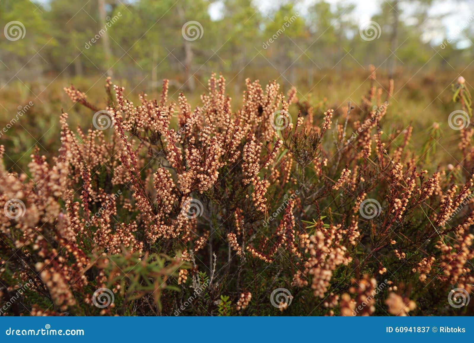 A flora do pântano